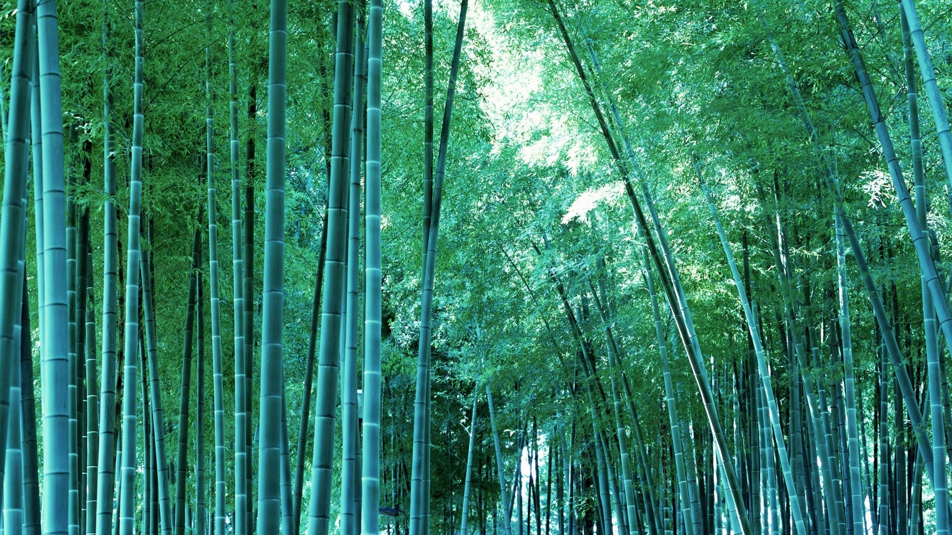 Bamboo wallpaper -? download free amazing wallpapers for des.