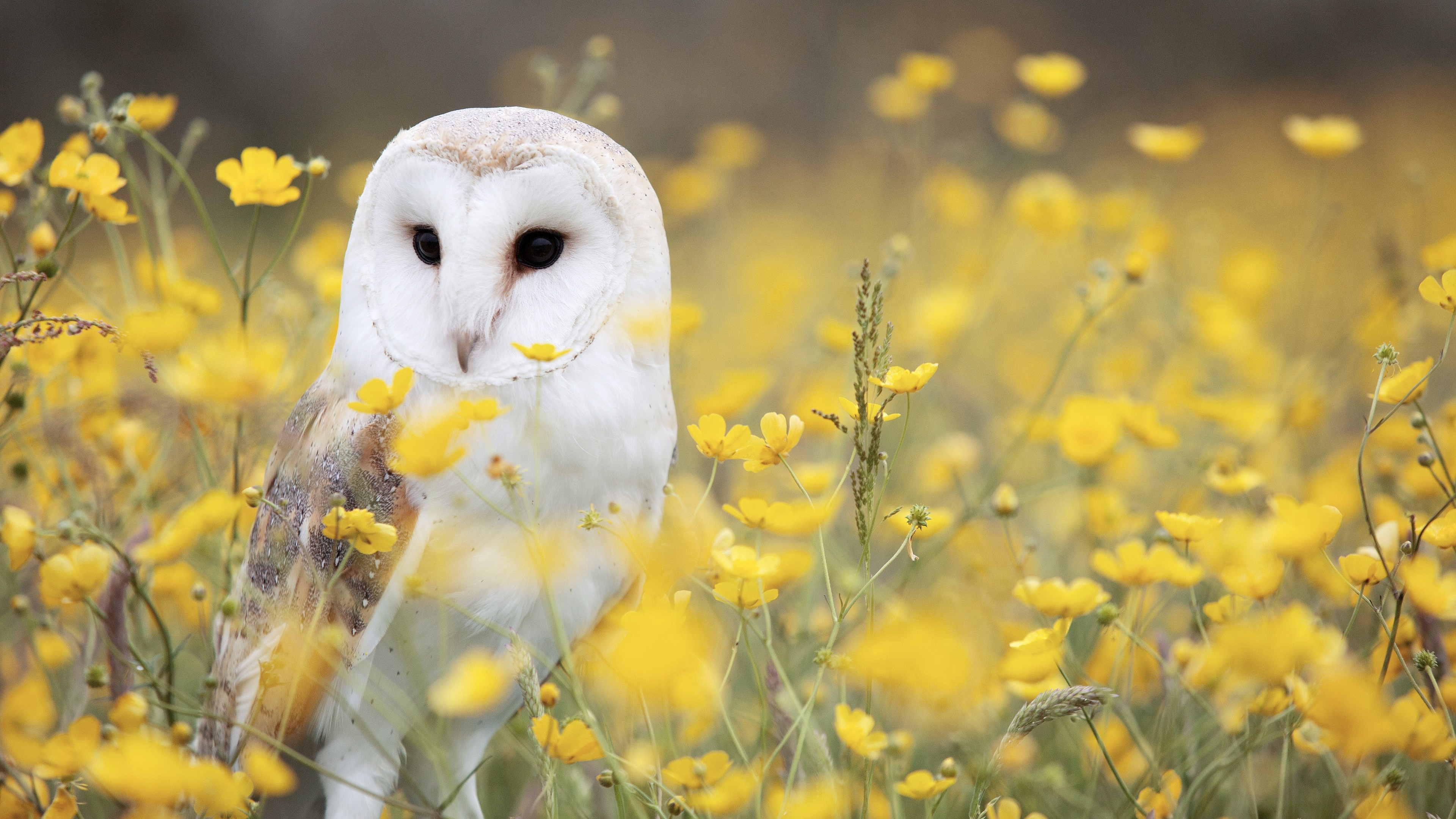 Owl Wallpaper 1 Download Free Cool High Resolution Backgrounds For