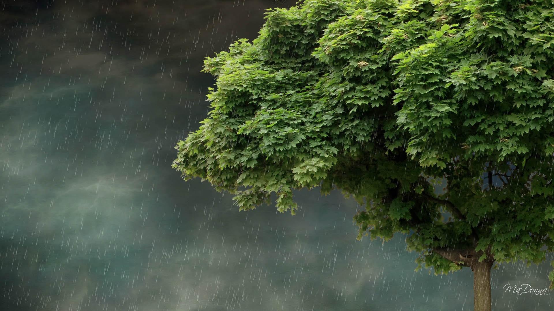 Beautiful rainy landscapes wallpapers hd 2018 wallpapertag - Top hd wallpapers 2018 ...