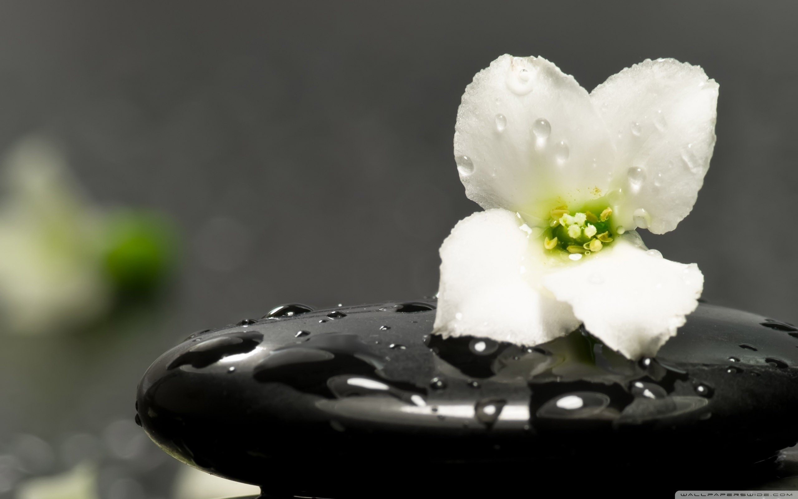 Zen Wallpaper 1920x1080: Zen Background ·① Download Free Stunning HD Backgrounds