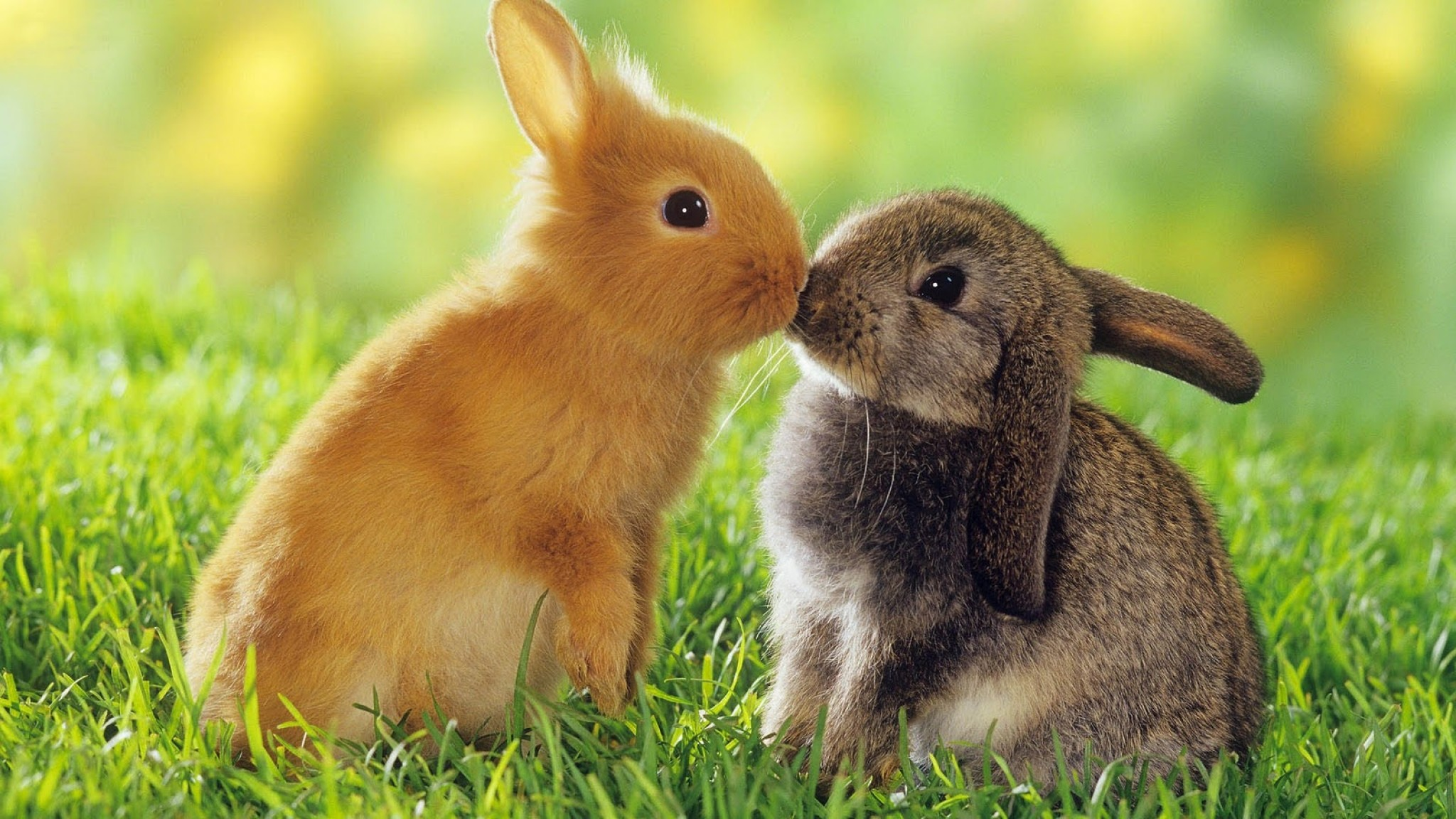 Cute Bunny Backgrounds 1
