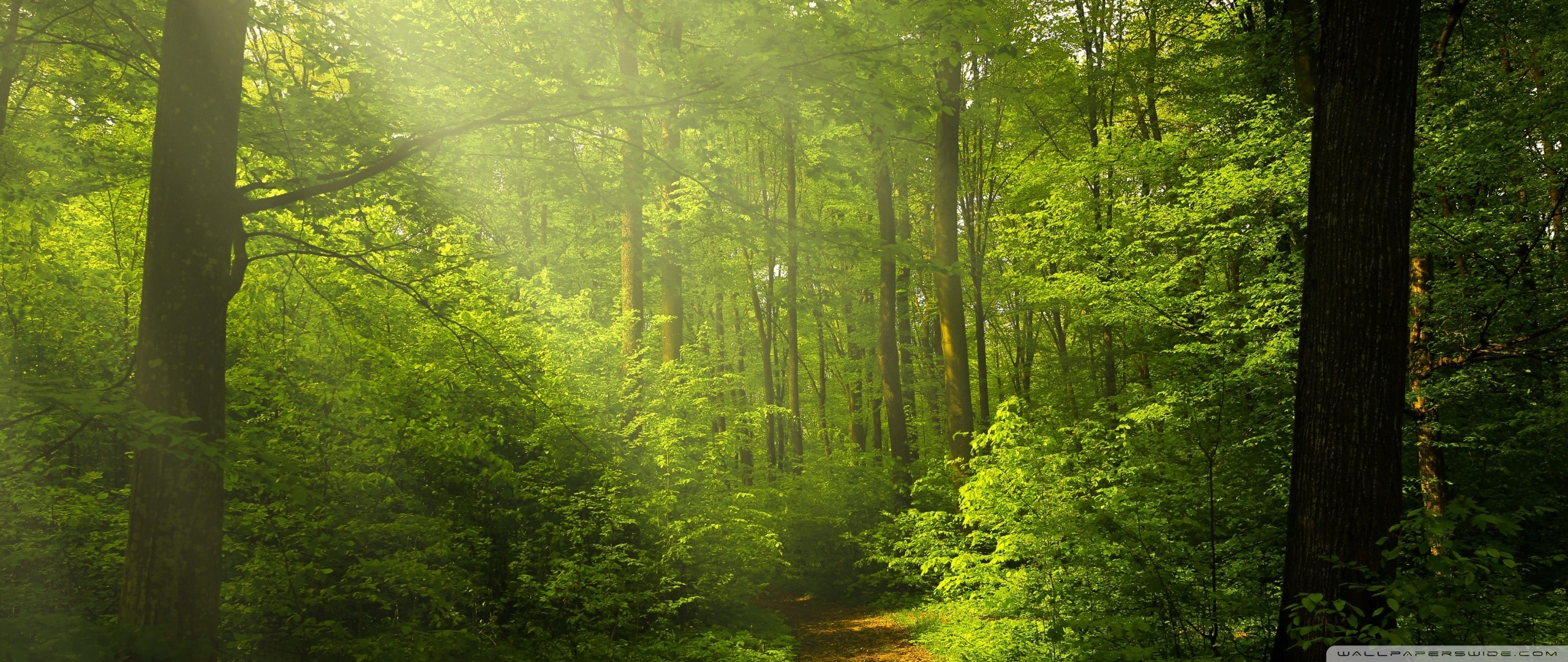 Green Forest Wallpaper ·① WallpaperTag