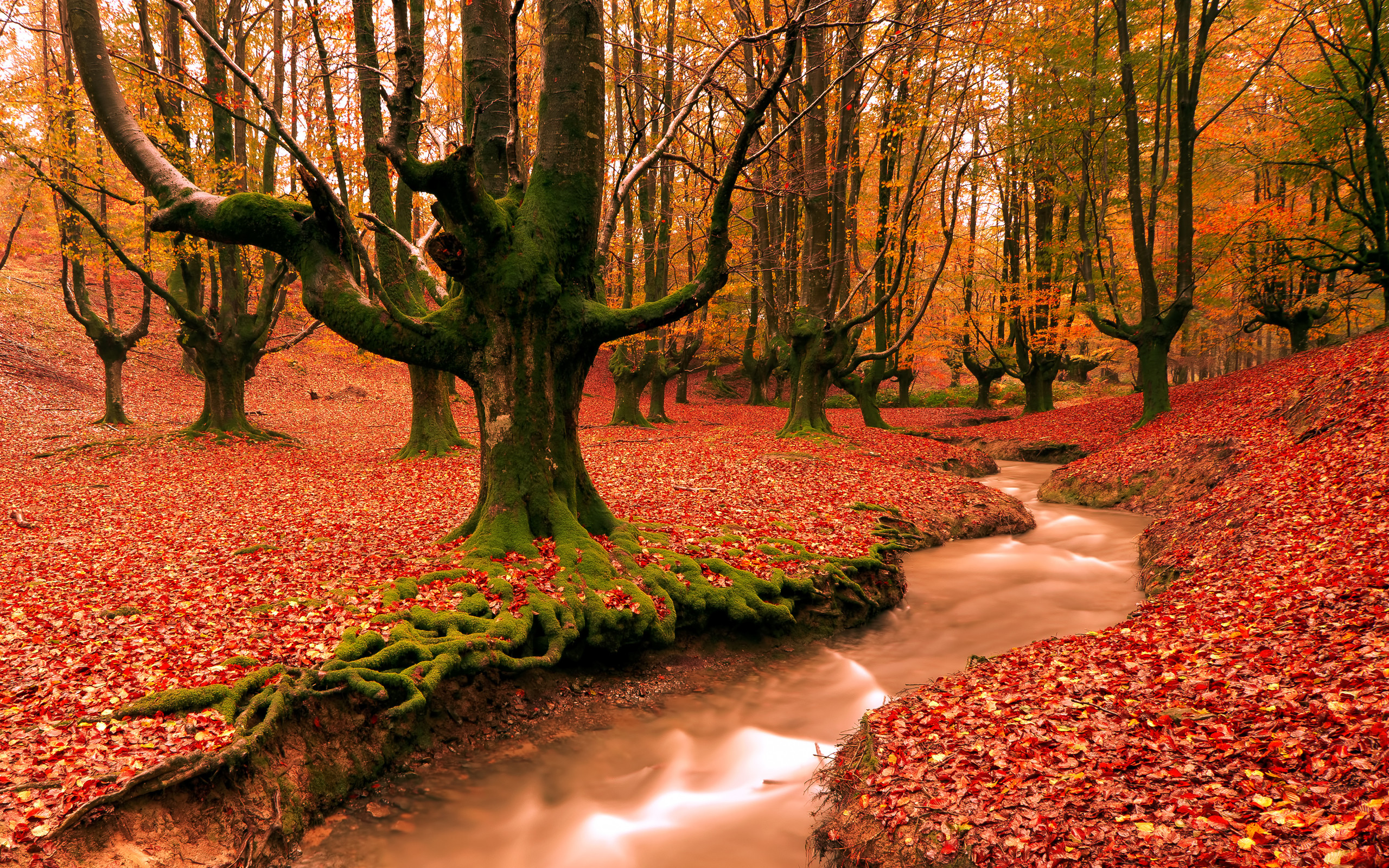 Autumn Pictures for Desktop Backgrounds ·① WallpaperTag
