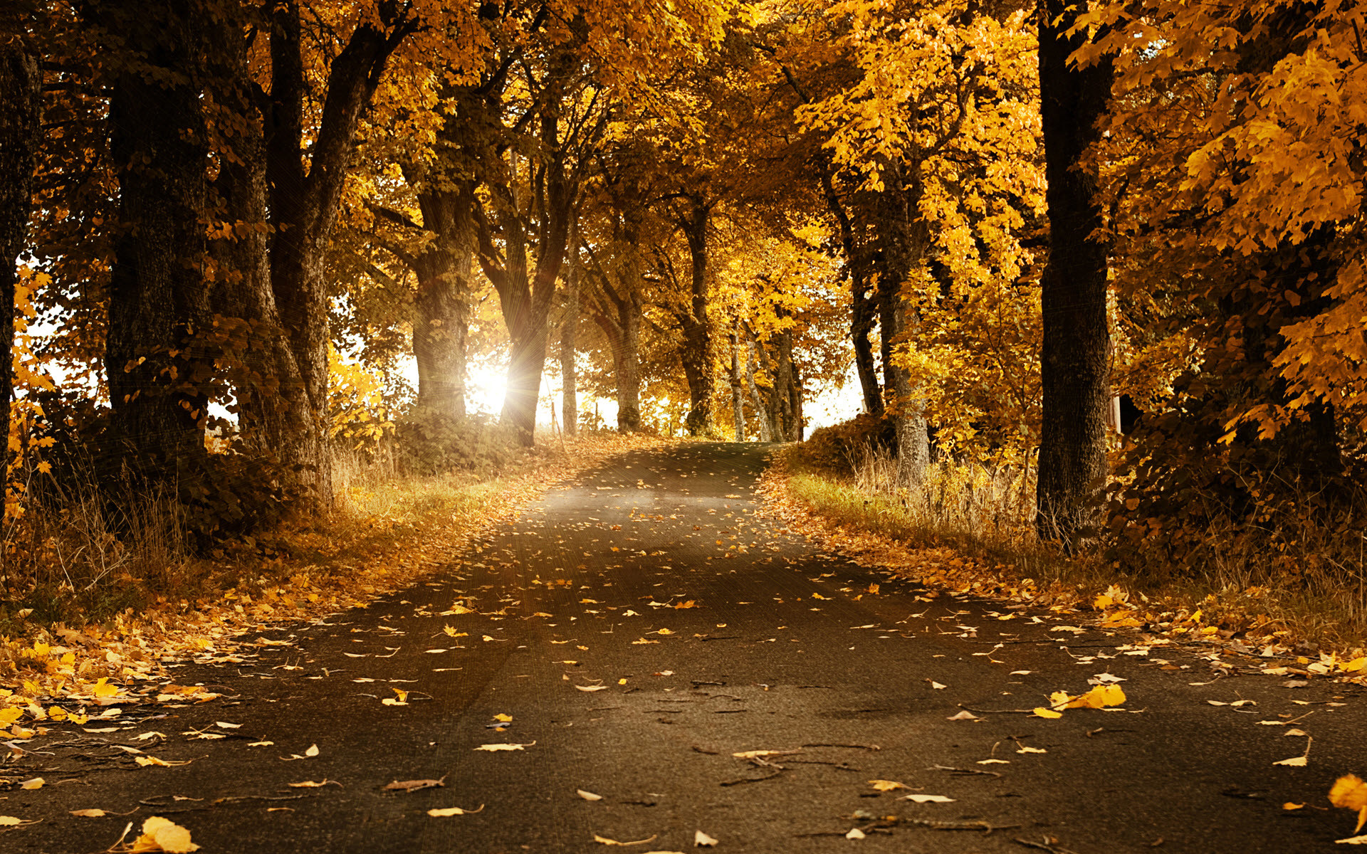 Cool Wallpaper Harry Potter Autumn - 442111-autumn-hd-wallpapers-1920x1200-download-free  Best Photo Reference_238128.jpg