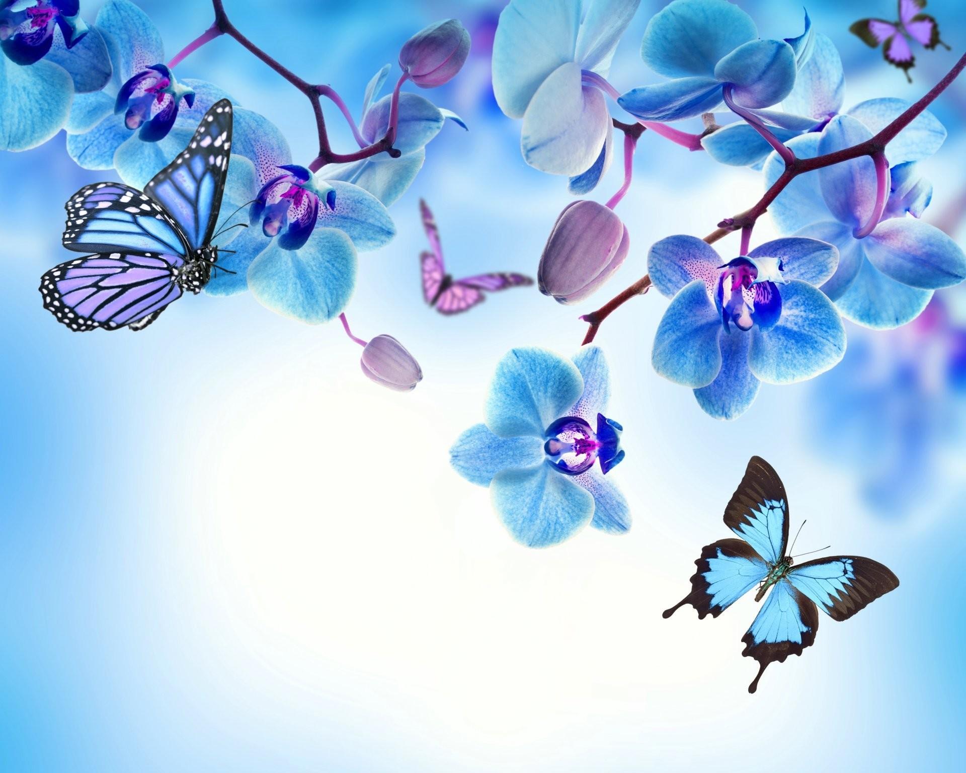 1920x1536 Orchid Blue Flowers Beautiful Butterflies Flower Butterfly