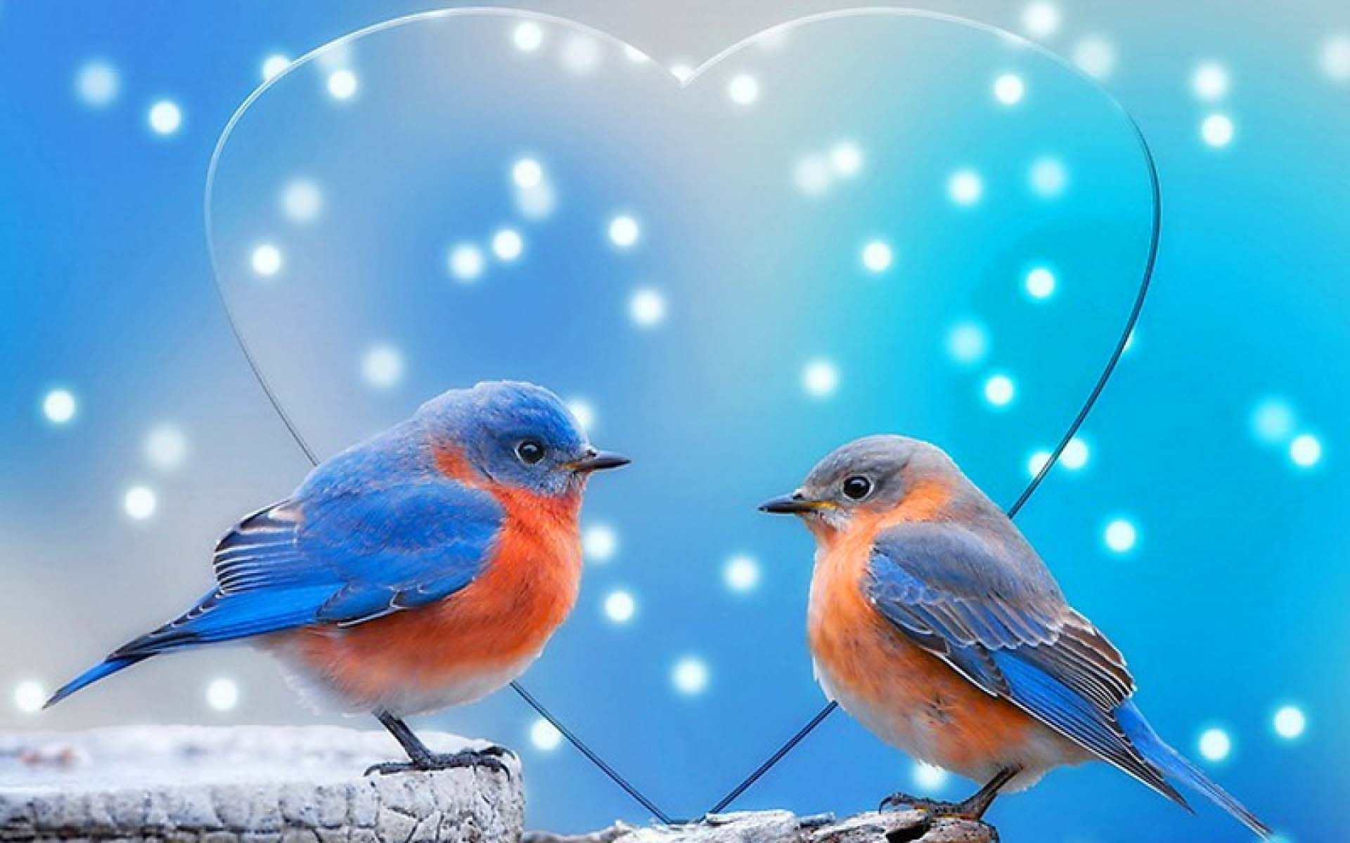 Love Birds Wallpapers ·①