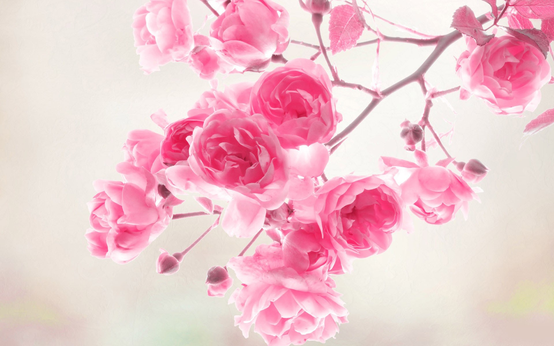 45+ flowers wallpapers ·① download free beautiful full hd