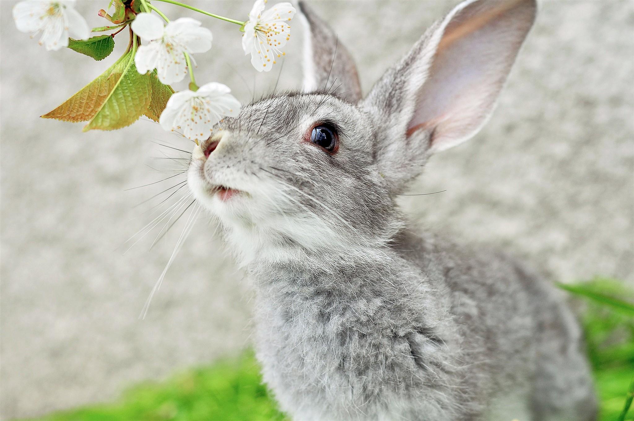 испуганный кролик  № 367678 бесплатно