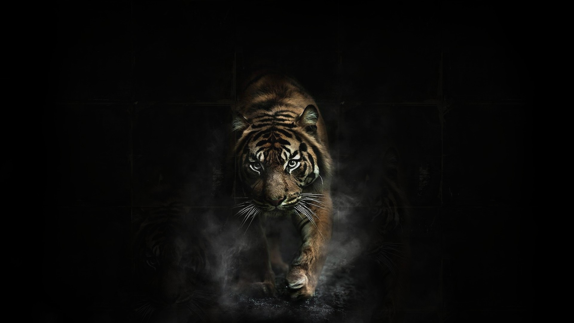tiger wallpaper ·① download free awesome high resolution