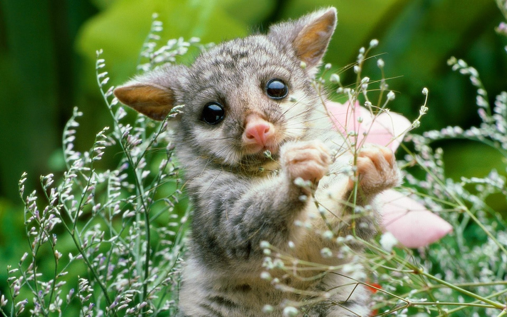 Cute Baby Animal Wallpaper 1