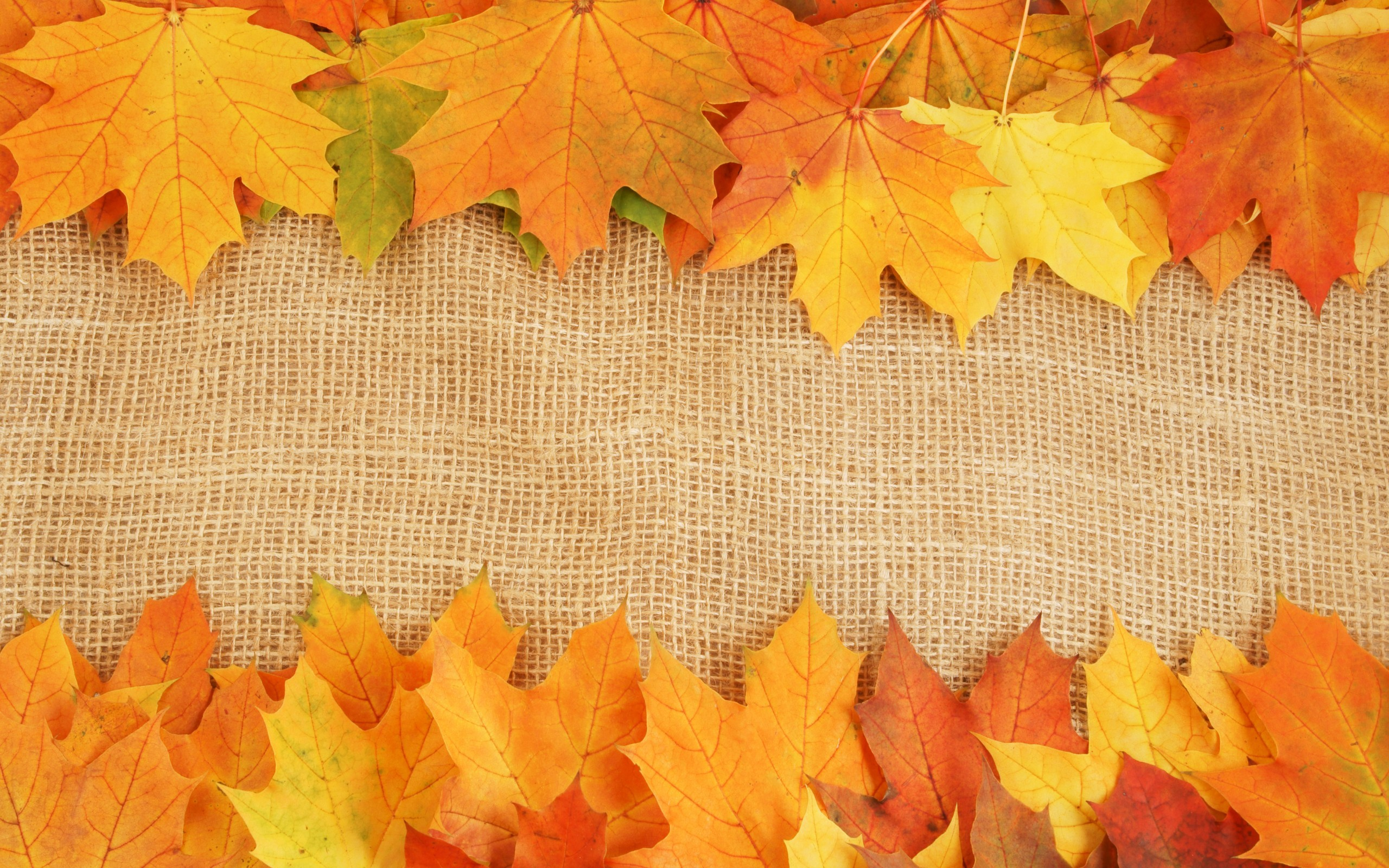 Fall Leaves Backgrounds ·① WallpaperTag