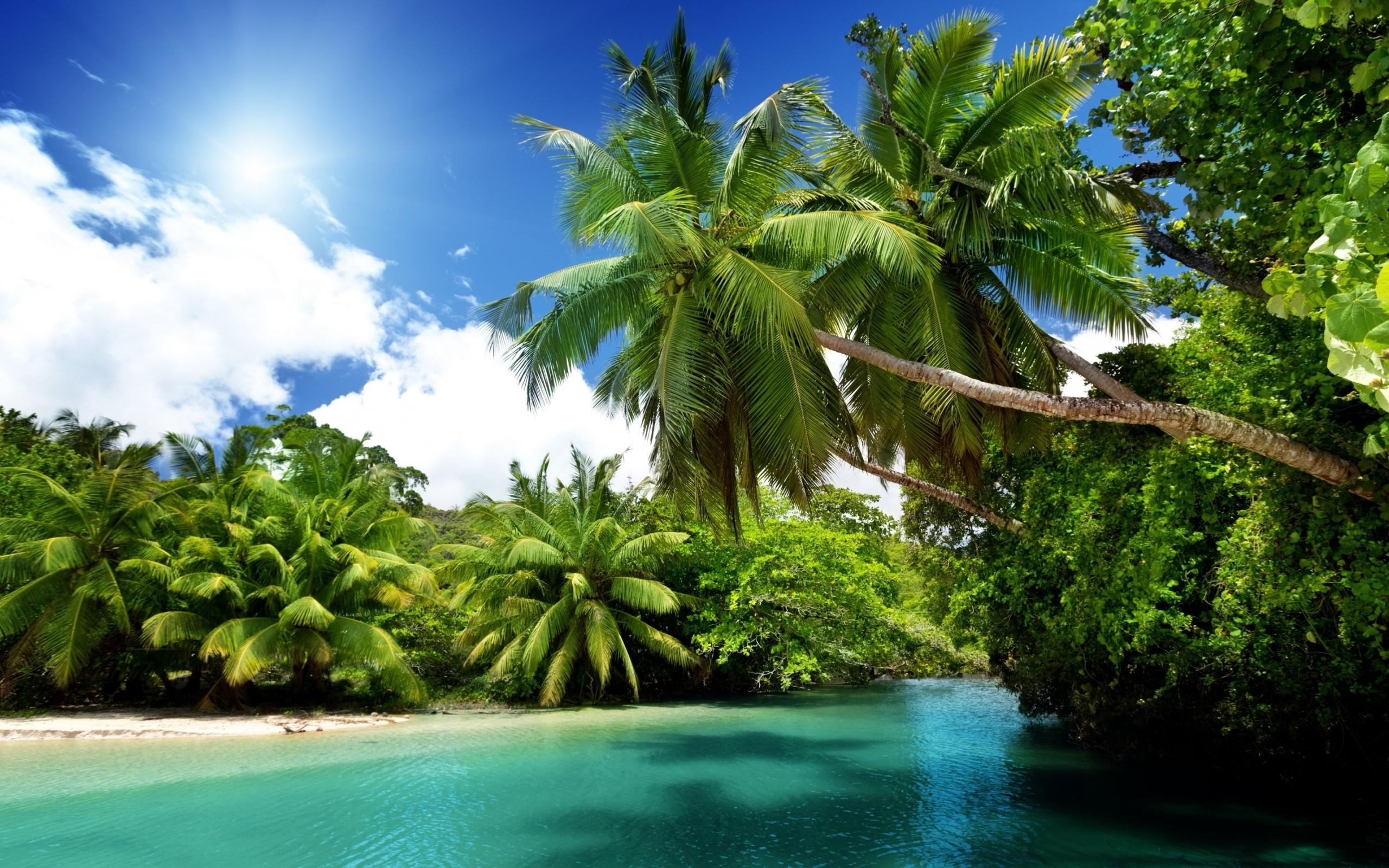 Palm Tree Beach Wallpaper ·① WallpaperTag