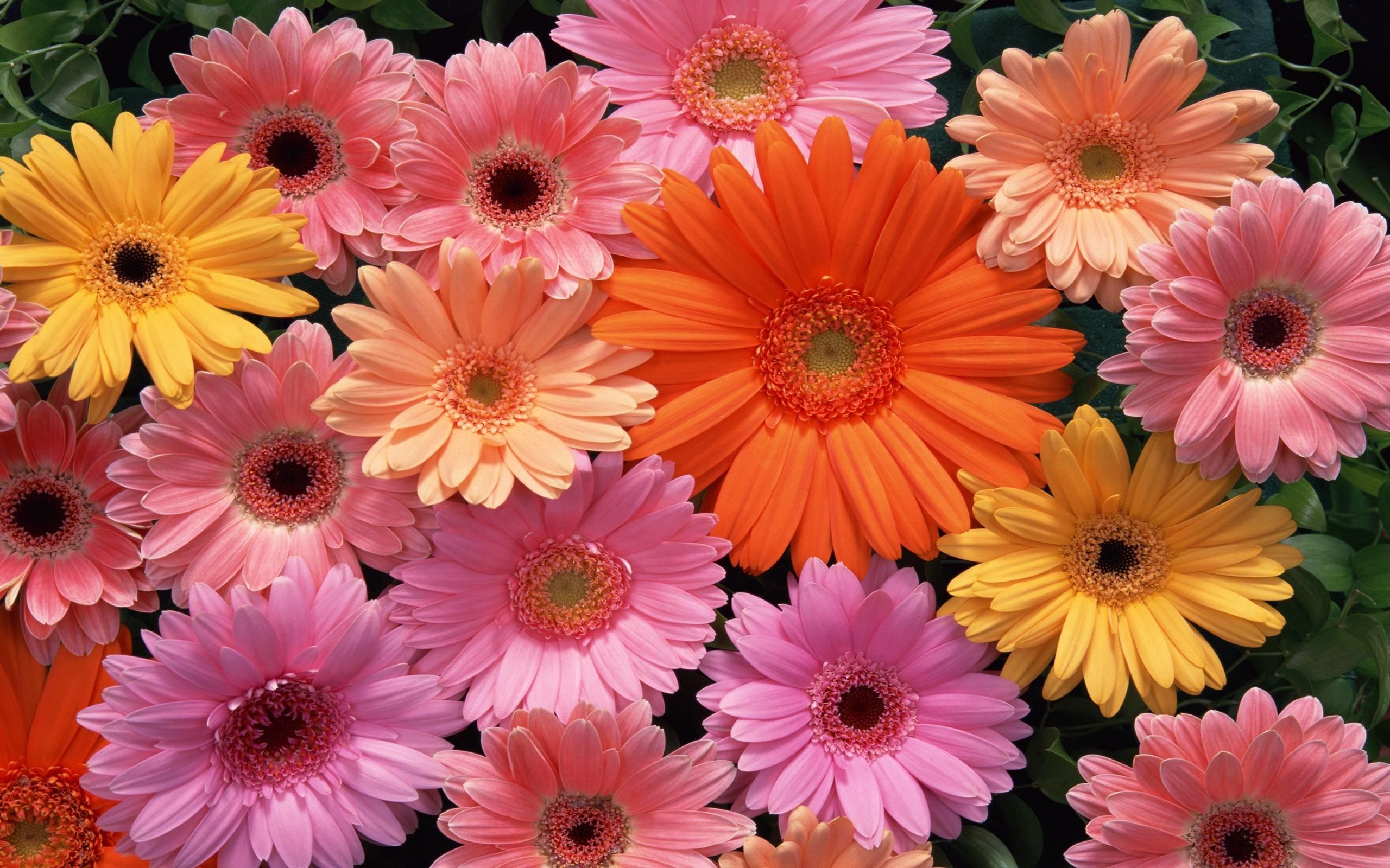 beautiful flowers wallpaper ·①