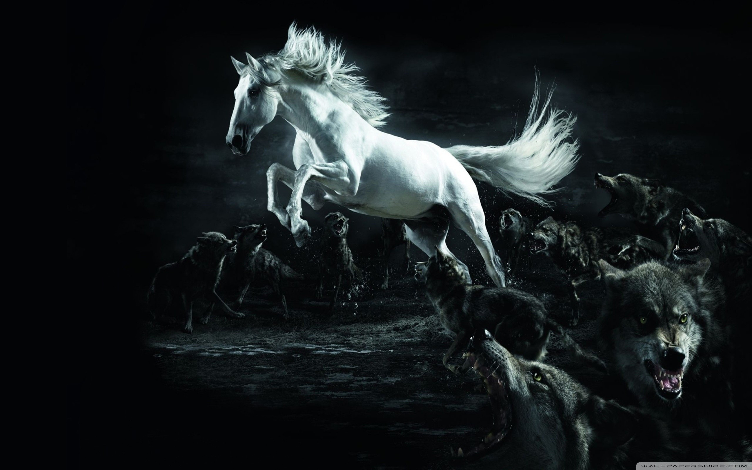 Black Horse Wallpaper Wallpapertag