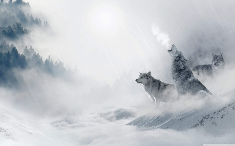 Wolves desktop wallpaper - Wolf howling hd ...
