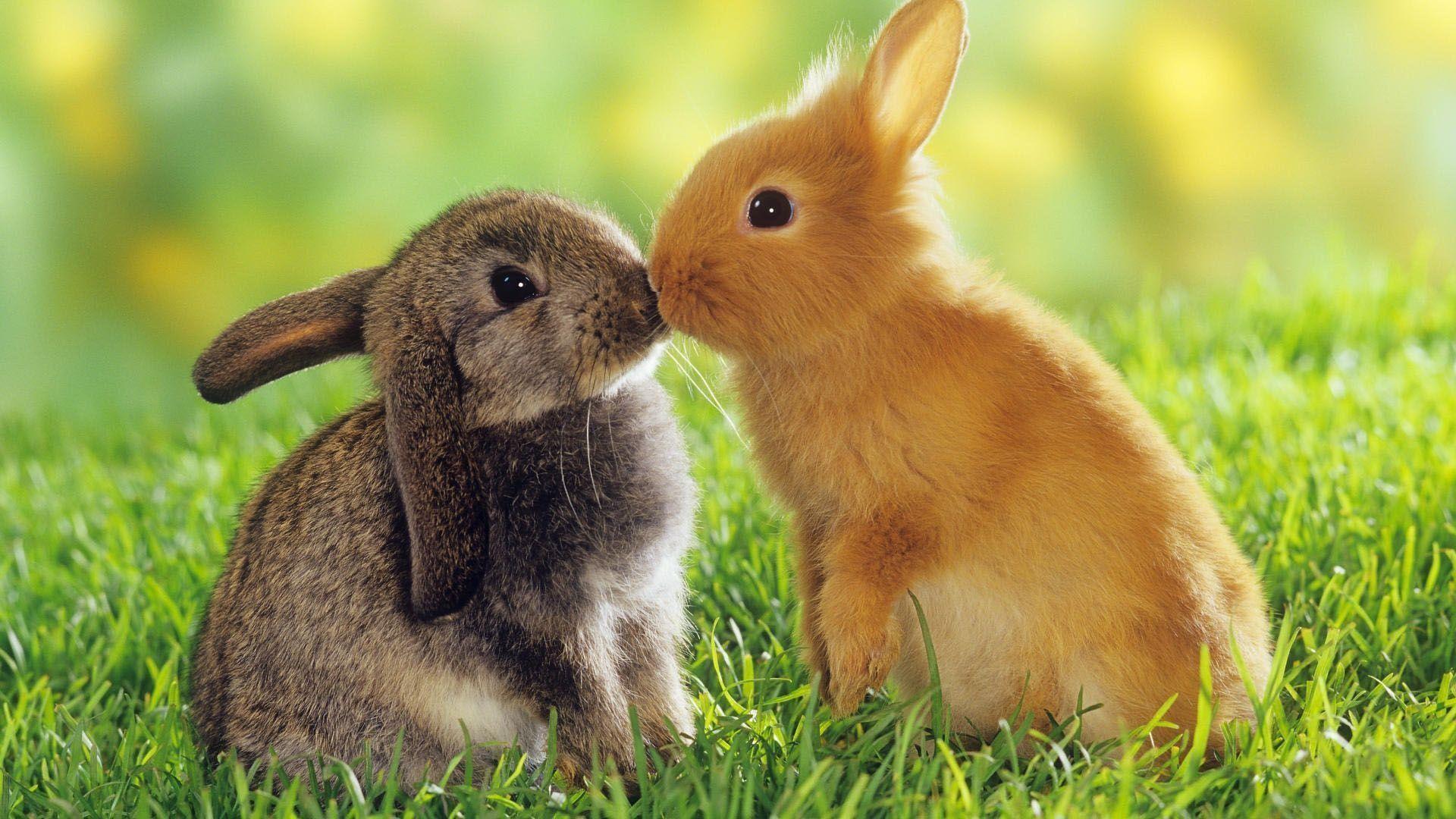 Easter Bunny Desktop Wallpaper Wallpapertag