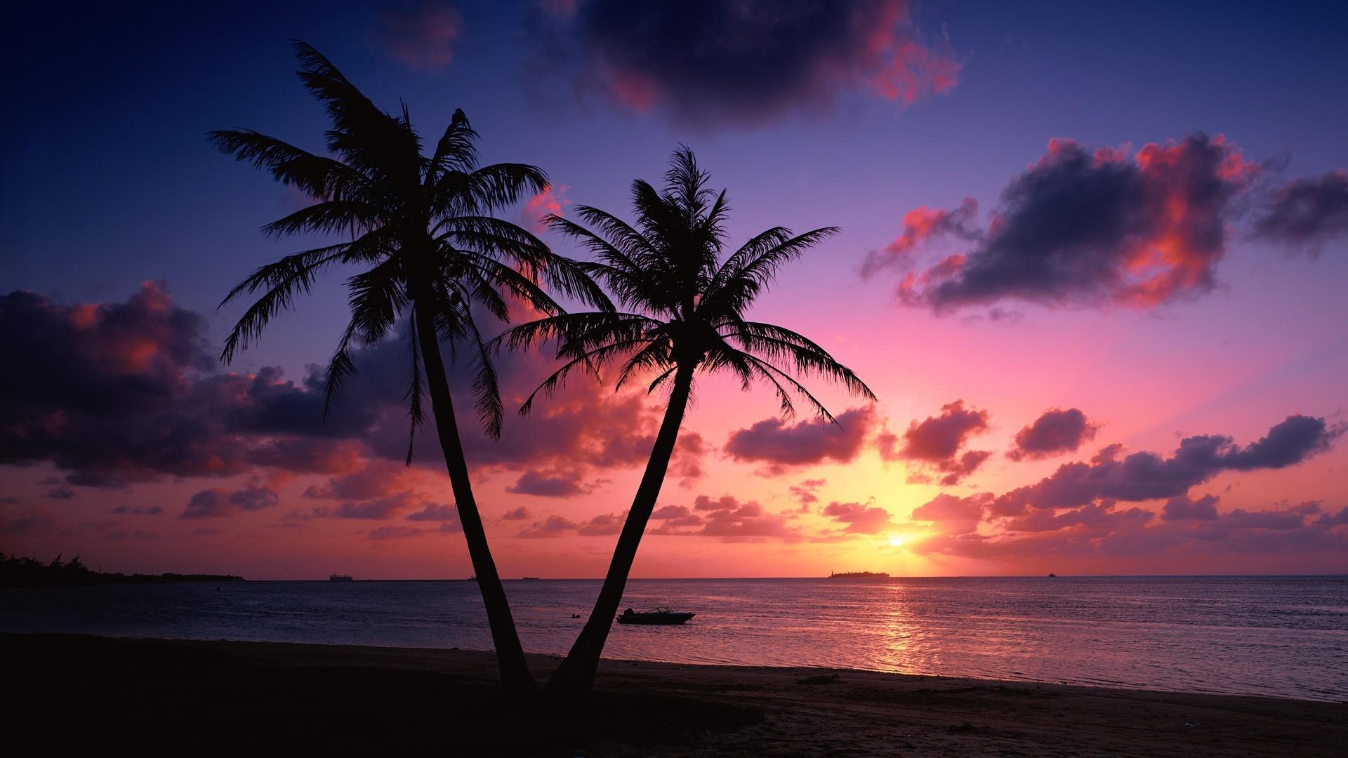 Palm tree beach wallpaper wallpapertag - Free palm tree screensavers ...
