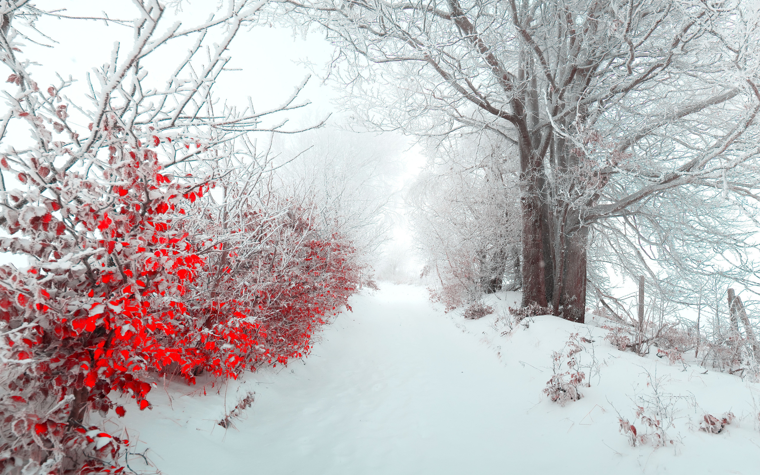 Beautiful snow wallpapers Beautiful snowfall pictures