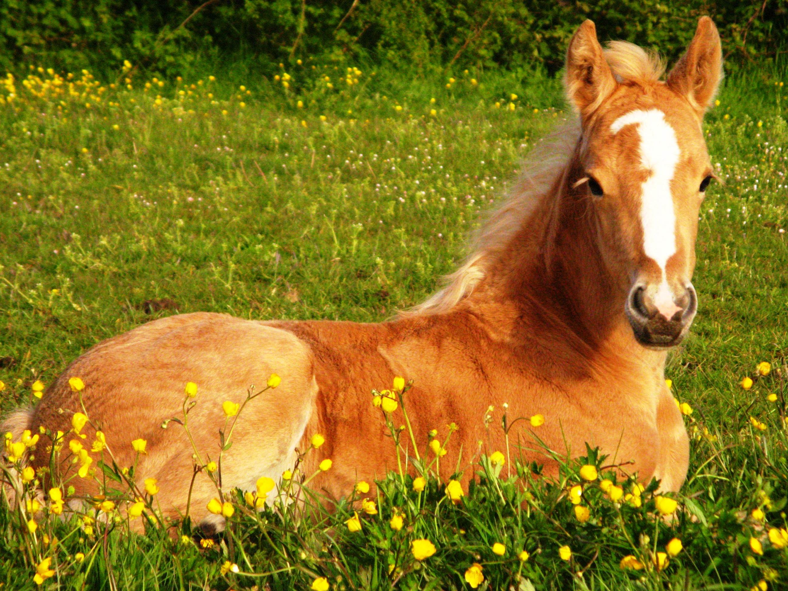 Cute Horse Wallpapers ·①
