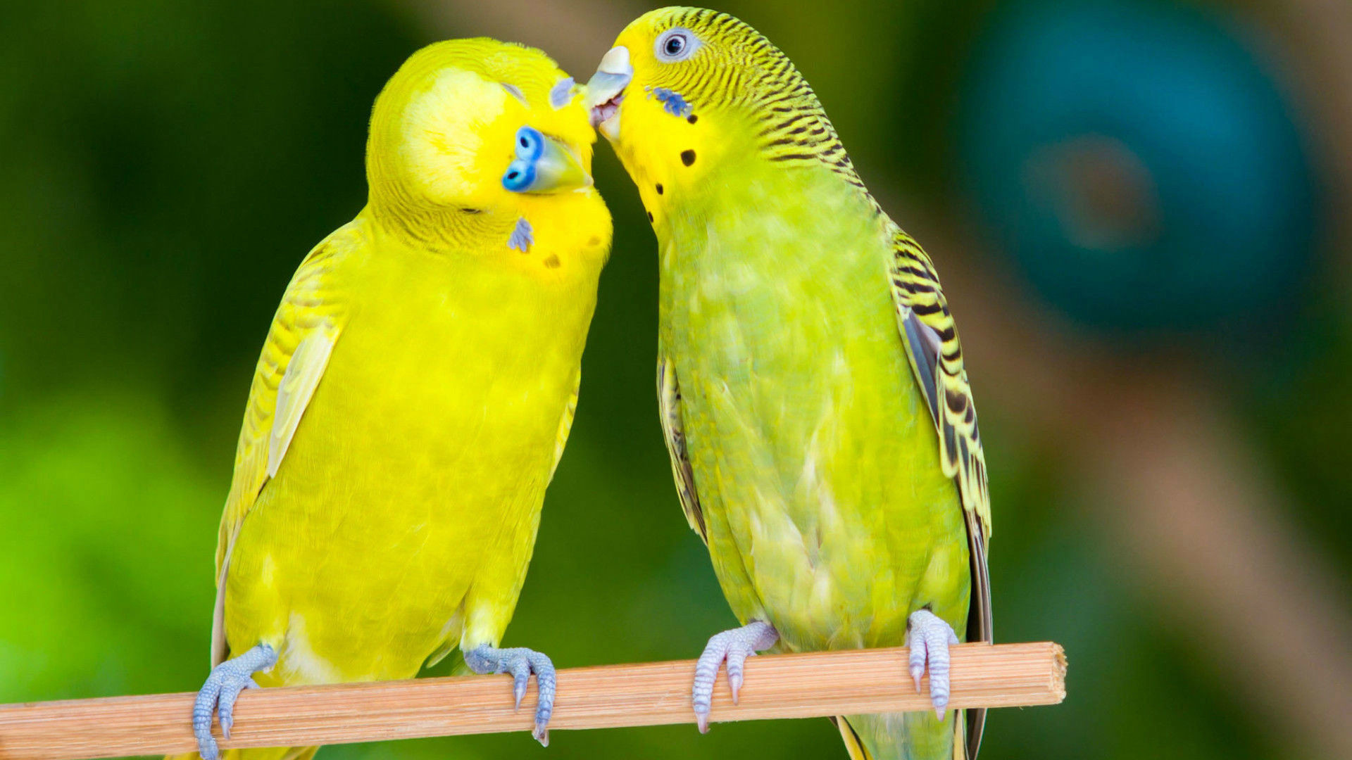 Love Birds Wallpaper Free Download For Pc: Lovely Birds Wallpaper ·① WallpaperTag