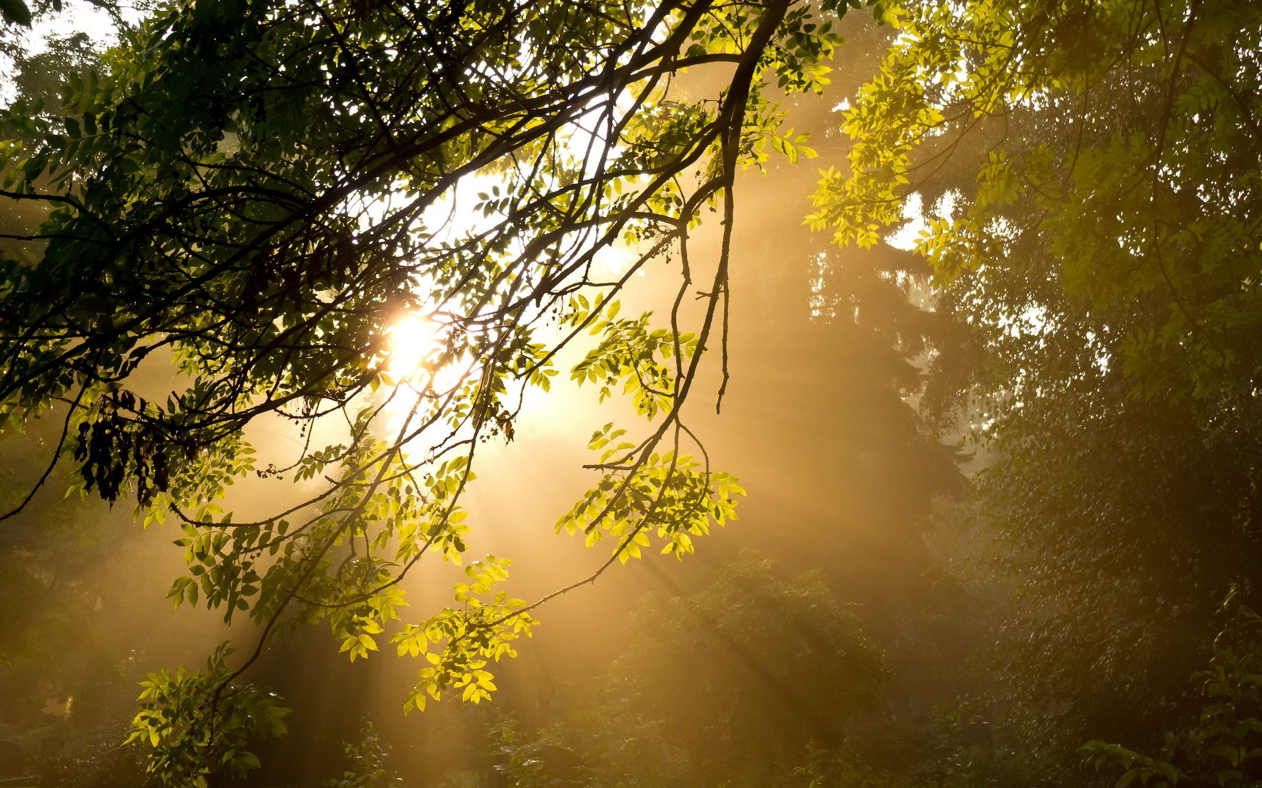 Лучи света сквозь листья  № 3096080 бесплатно