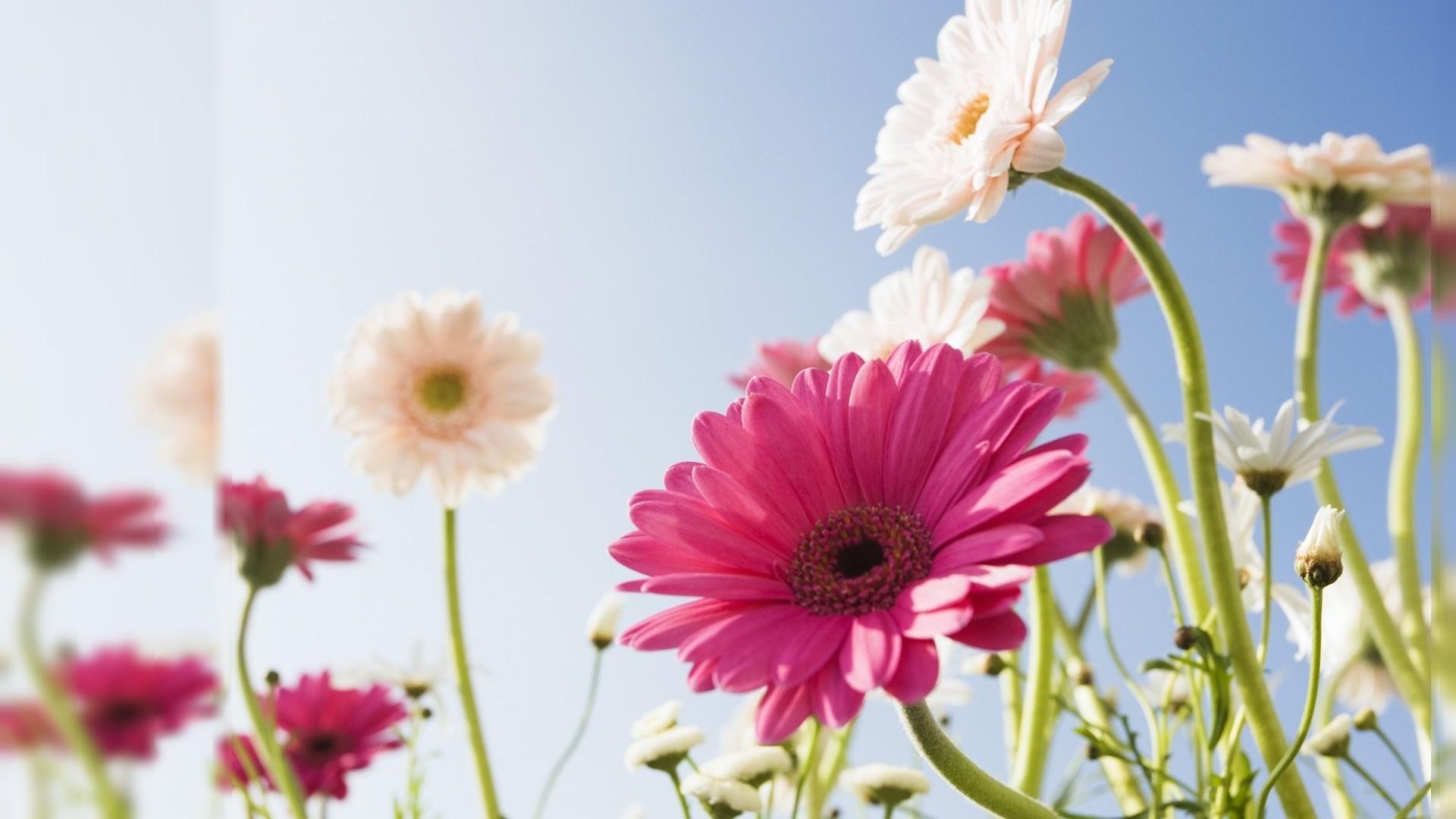 Flower Computer Backgrounds Wallpapertag