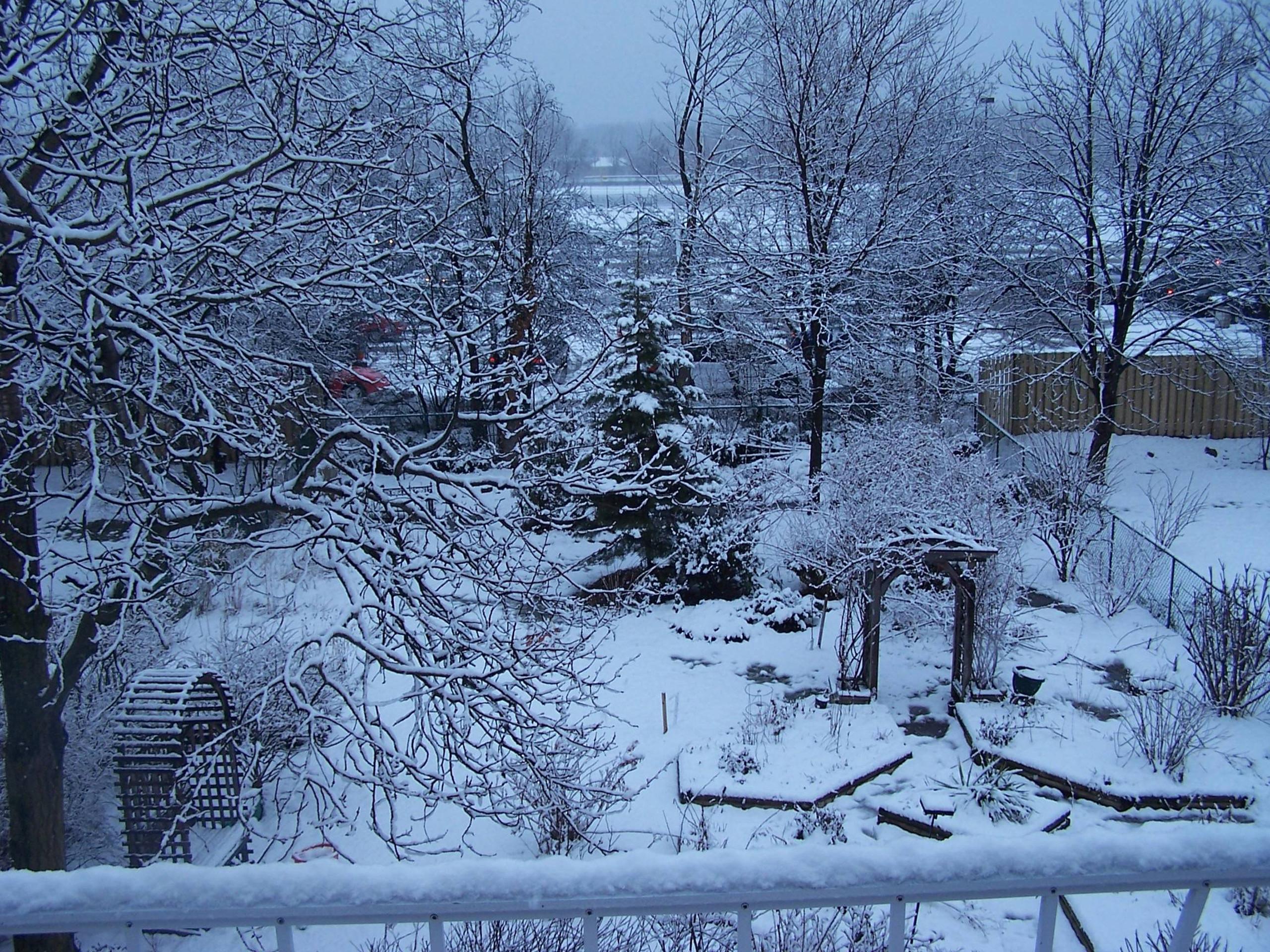 Зима сад картинки