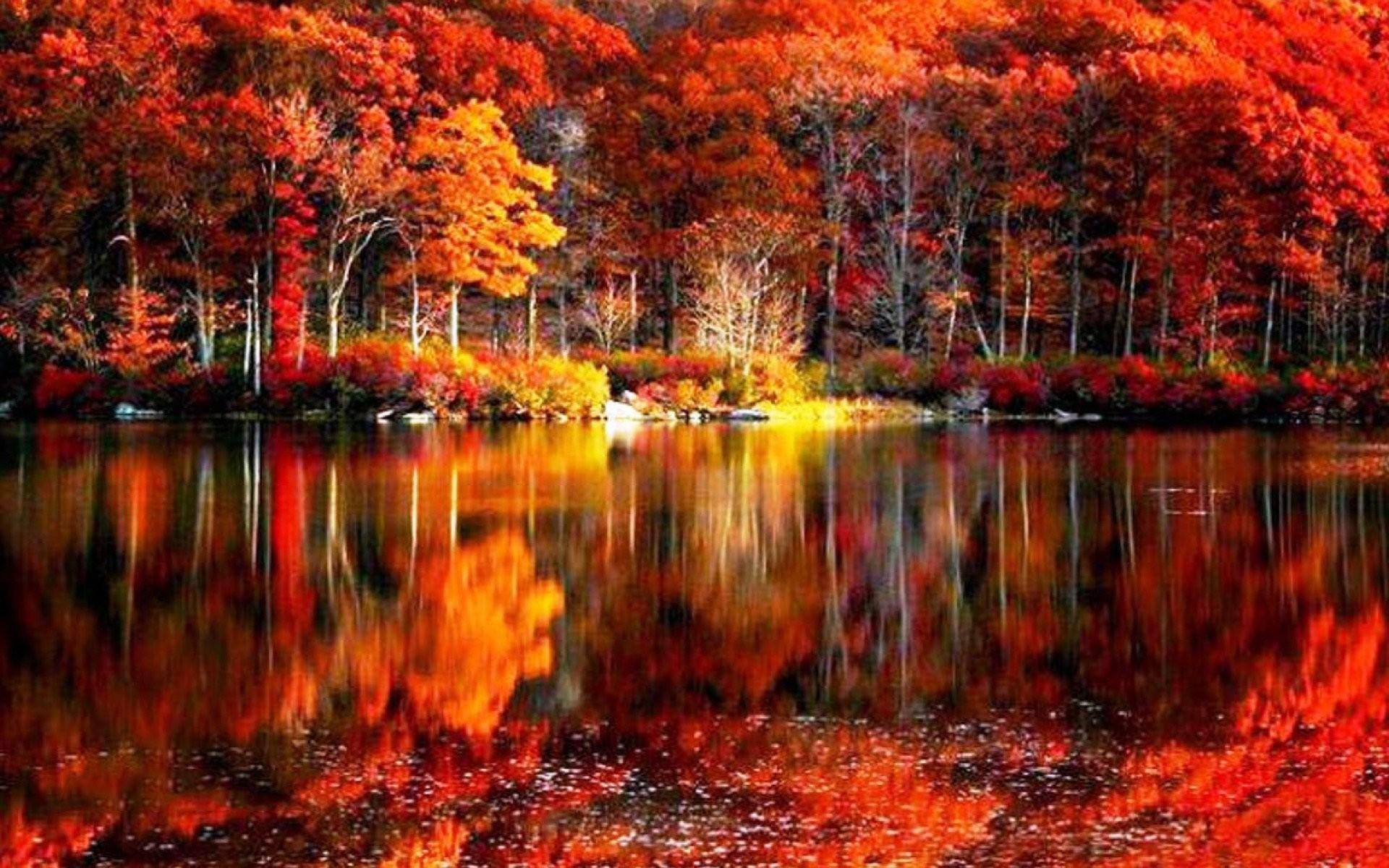Fall Foliage Wallpaper ·①