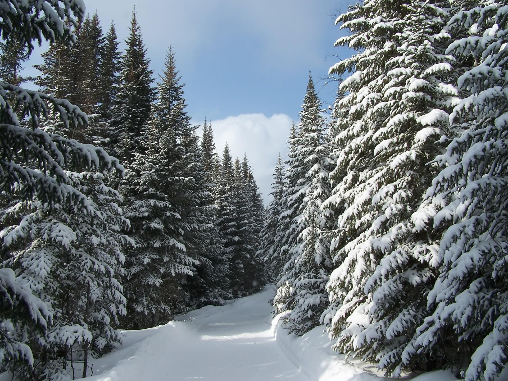 Winter Nature Wallpaper ·①