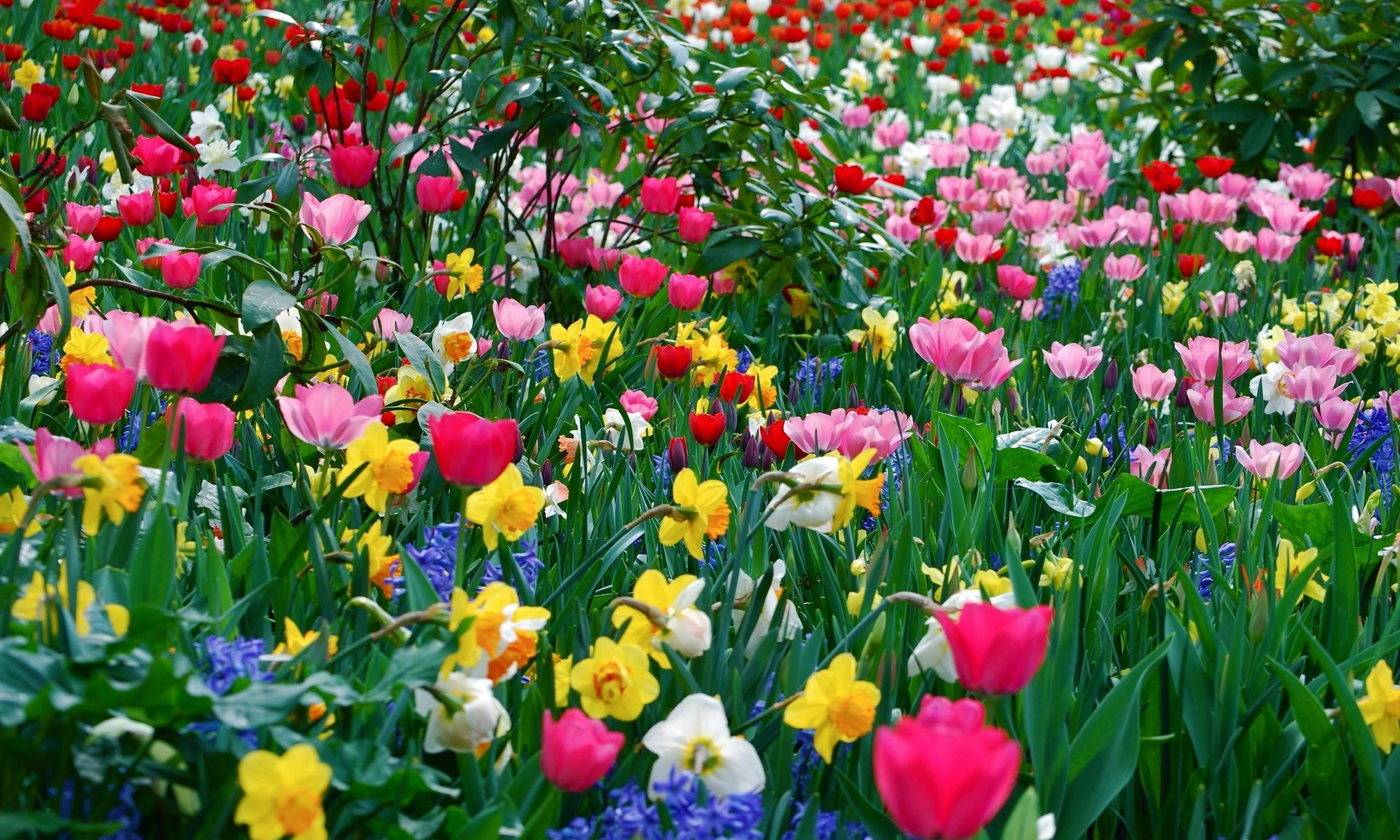 Spring flowers background spring mightylinksfo