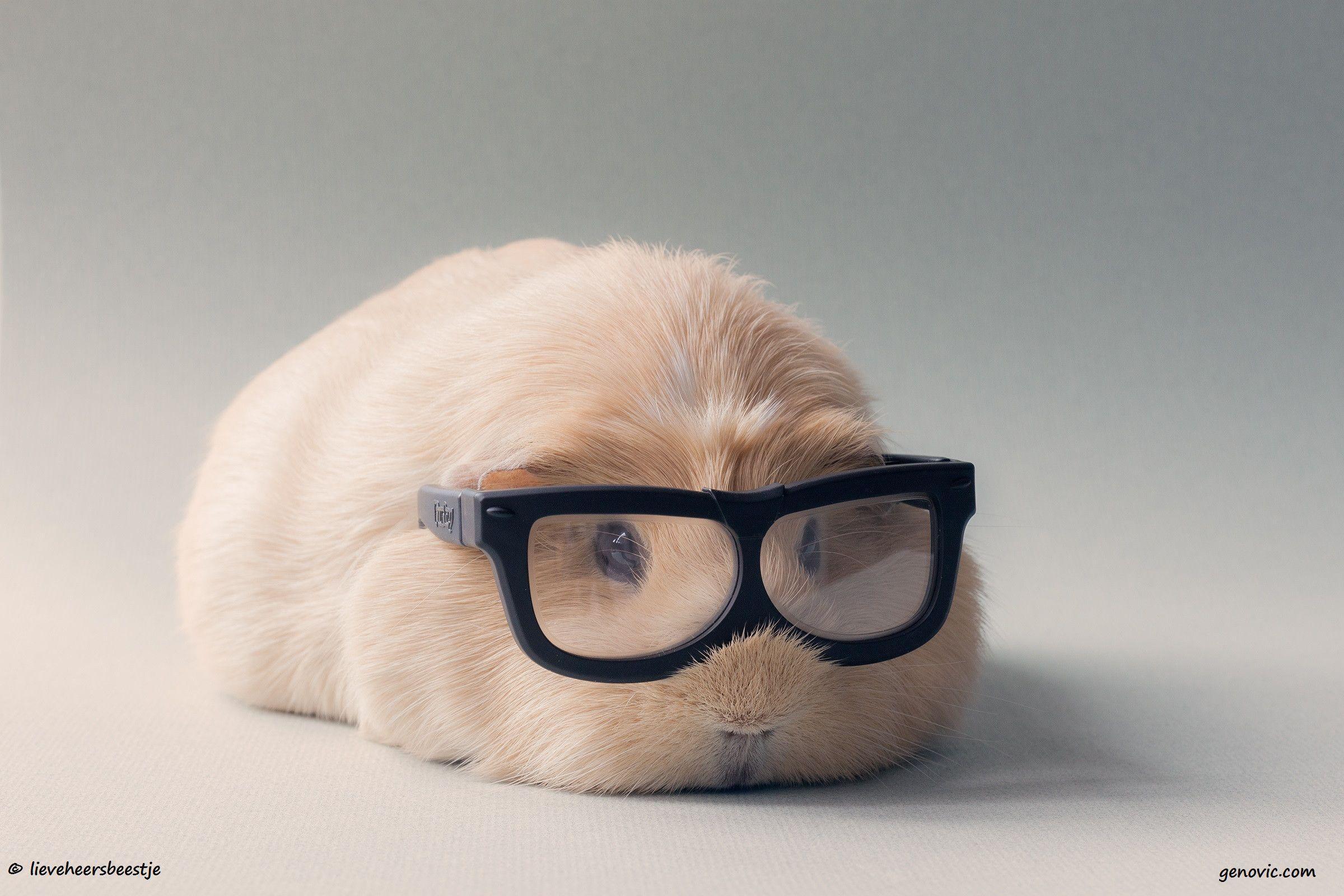 Funny Animal Desktop Backgrounds 1