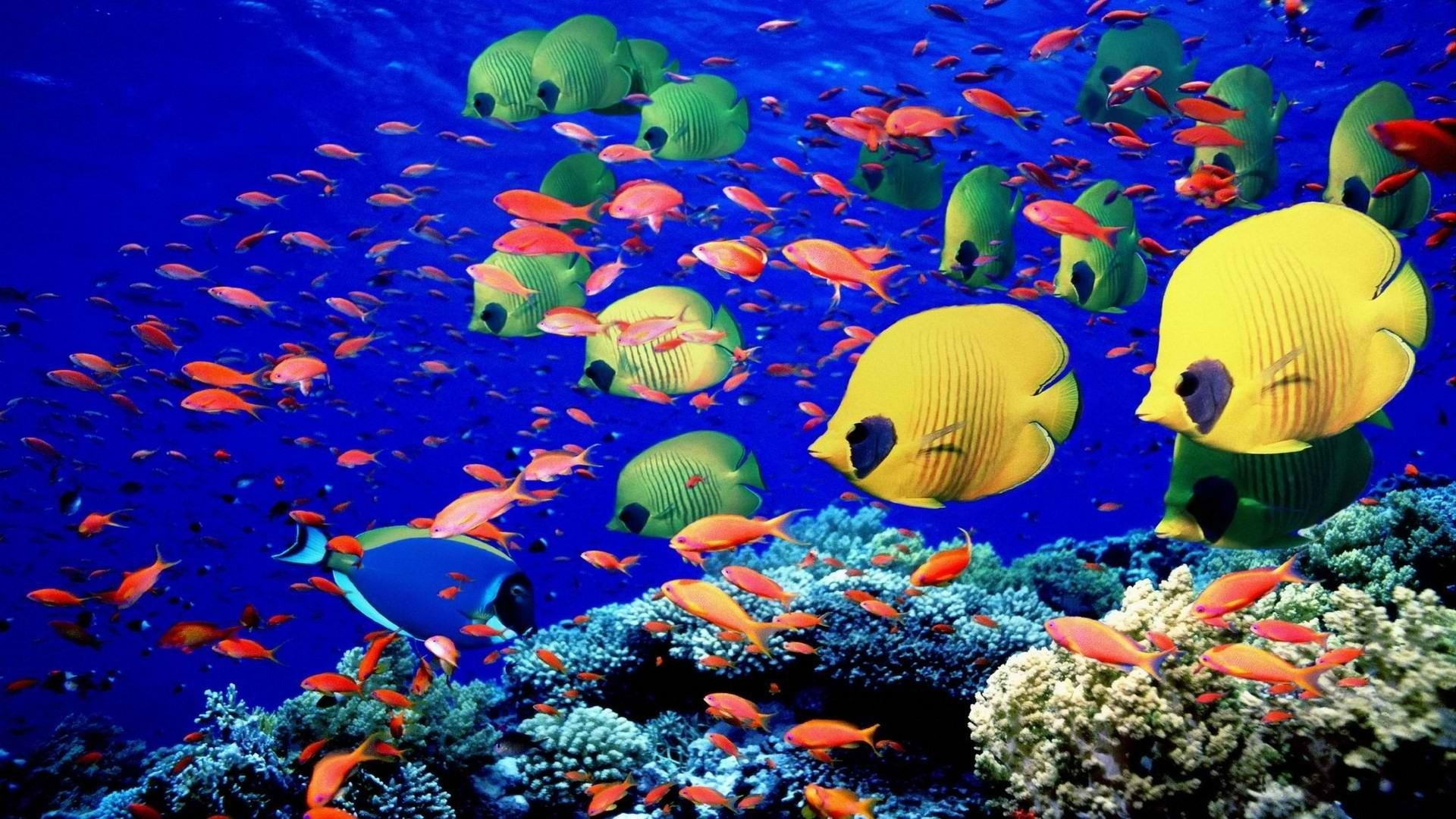 Coral Reef Wallpaper 1 Download Free Amazing Full HD Backgrounds