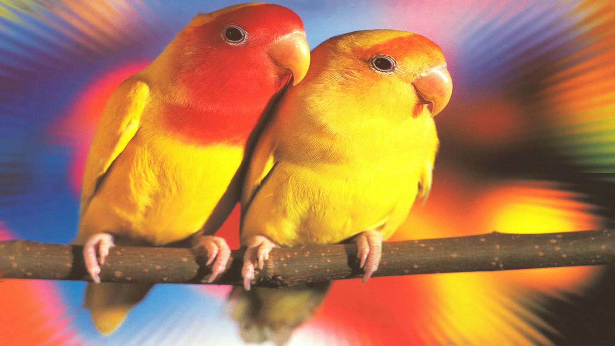 Wallpapers Love Birds