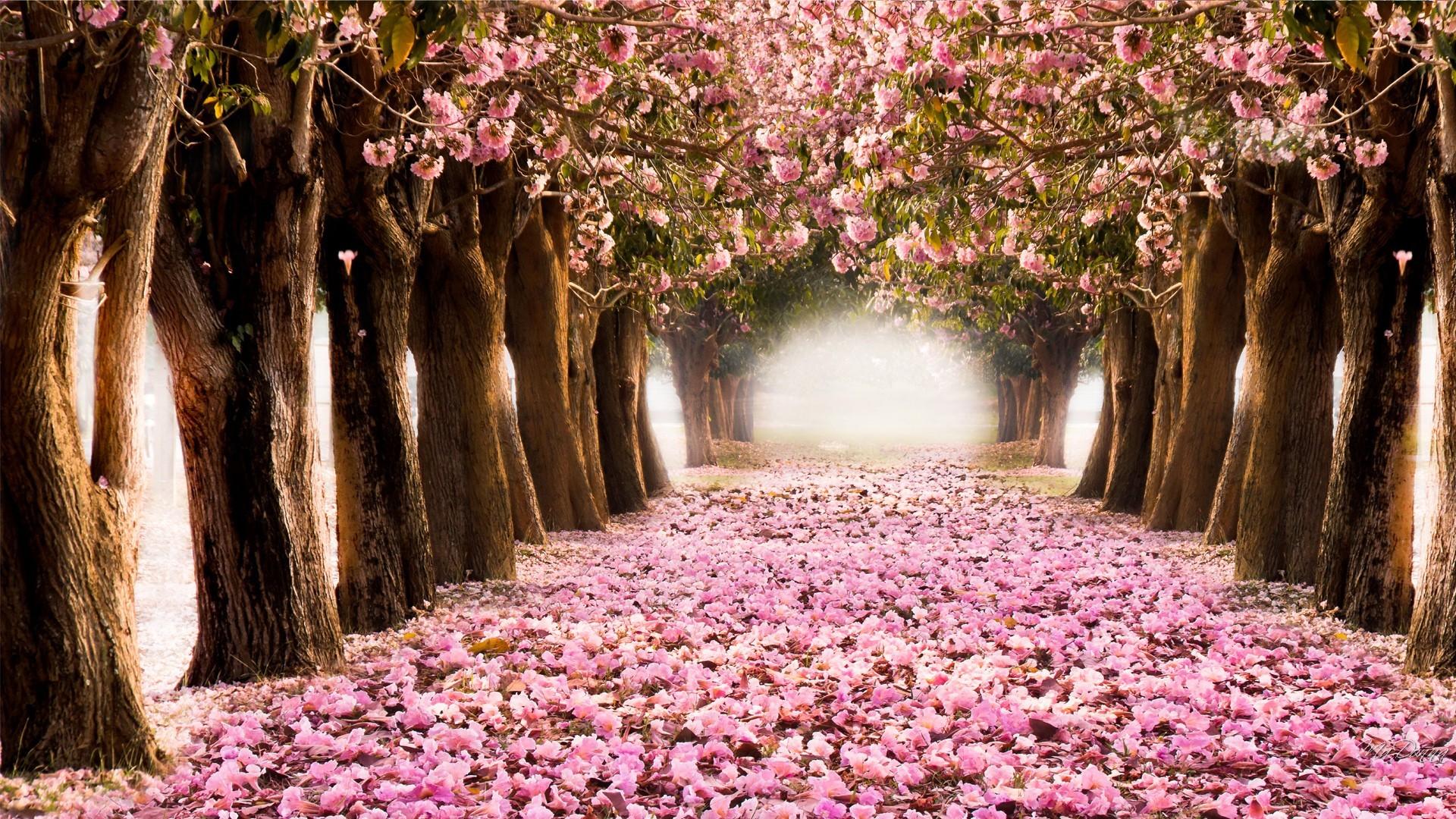 Spring screen wallpaper