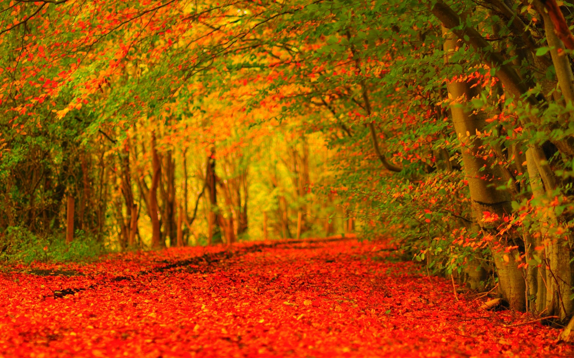 autumn wallpaper hd ·① download free wallpapers for desktop, mobile