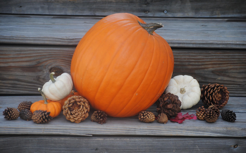 pumpkin desktop wallpaper 183��