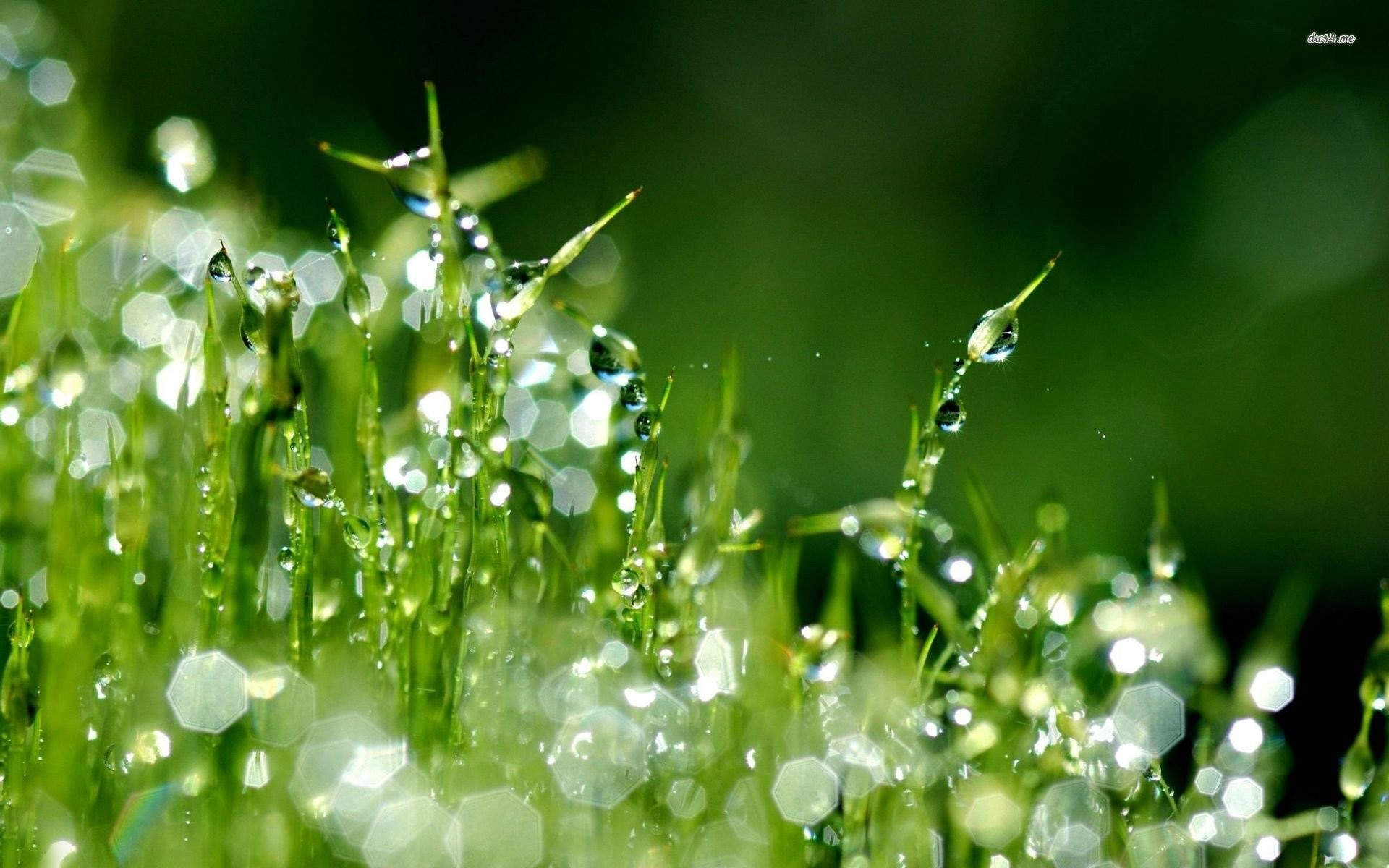 Wallpapers Of Raindrops ①
