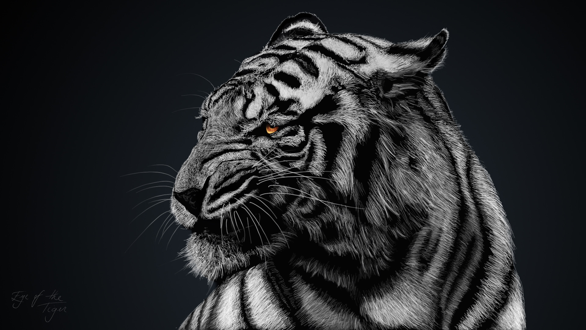 White Tiger Wallpaper 1080p White Tiger Wal...