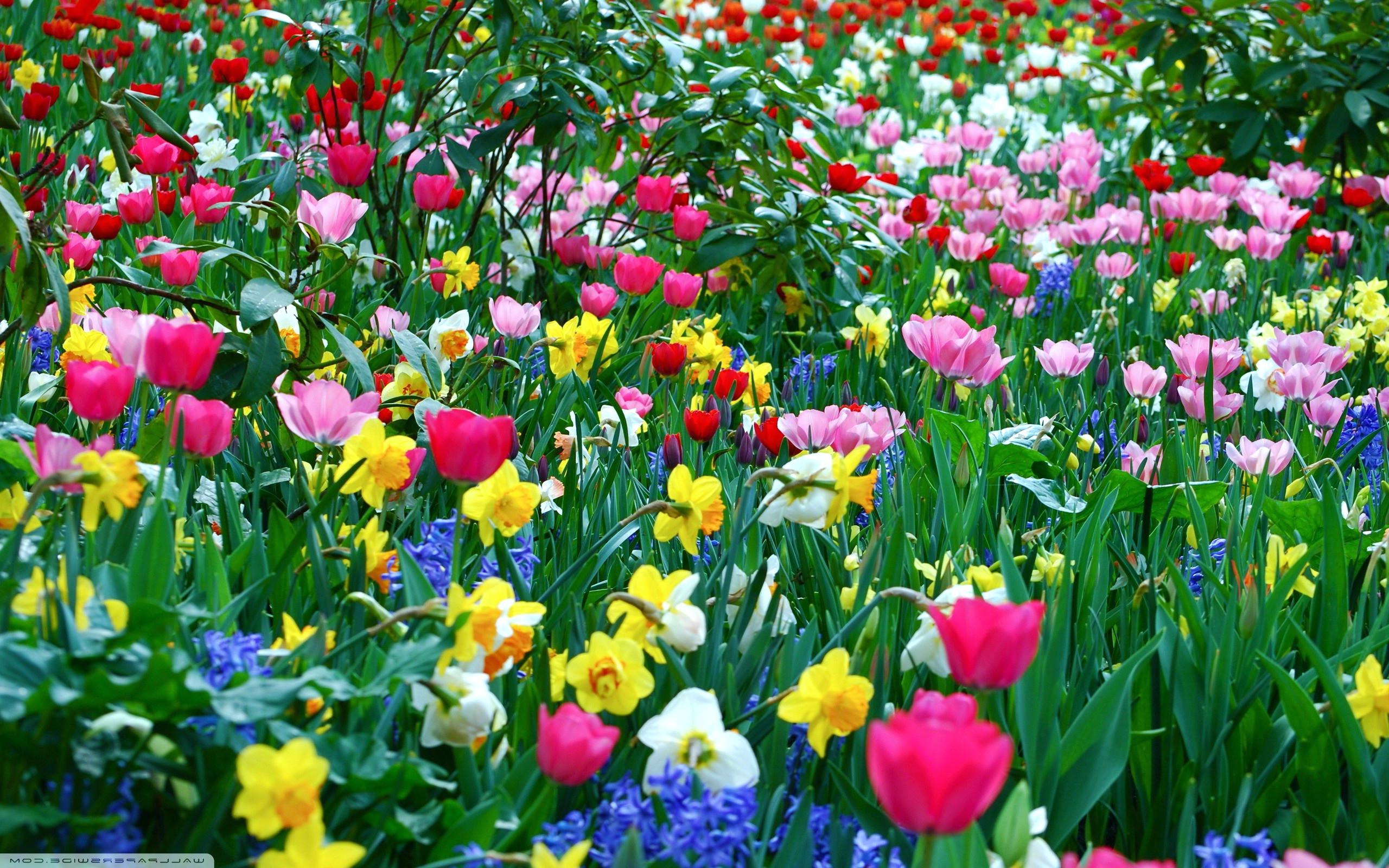 Springtime Desktop Background