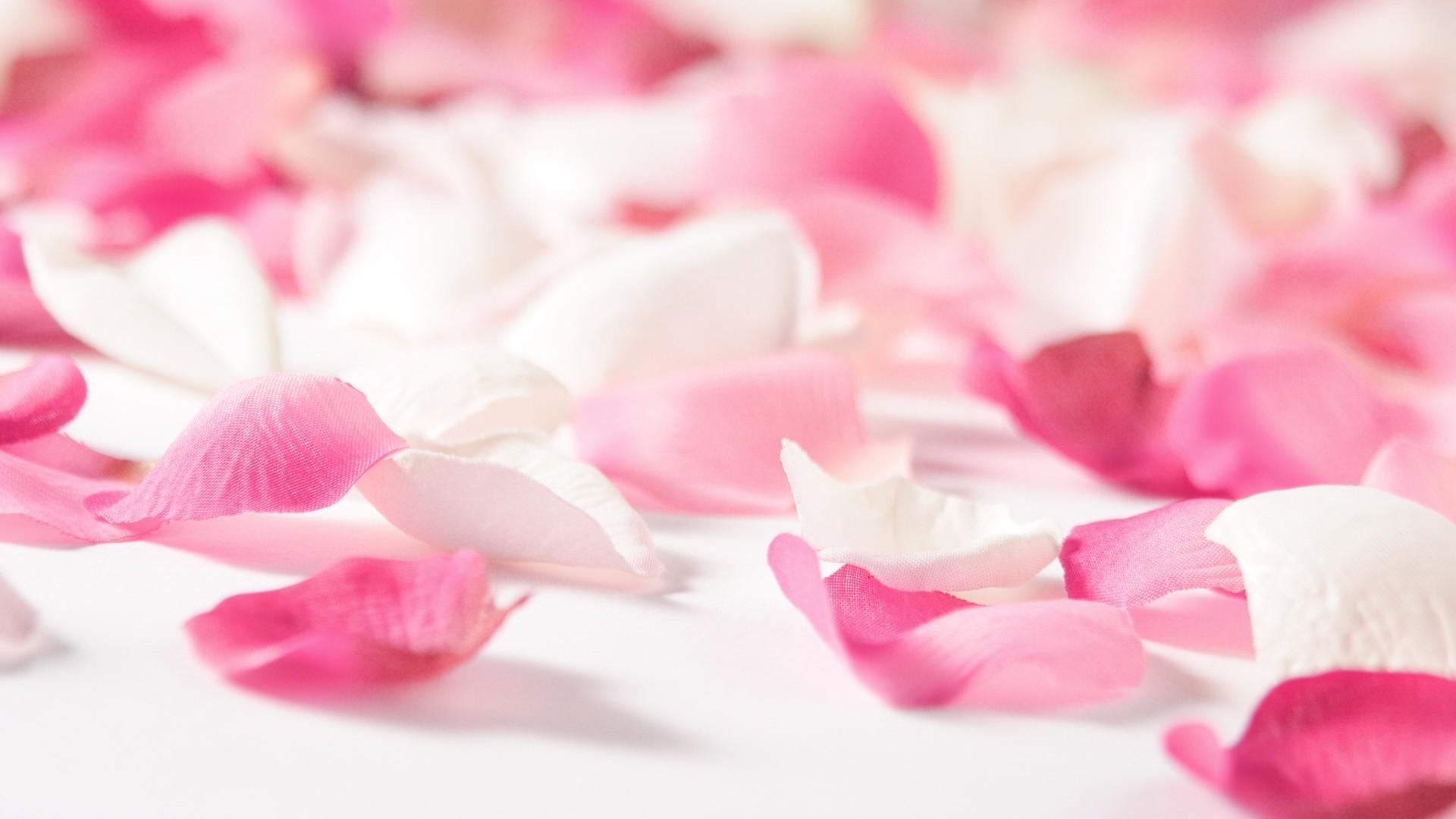Light Pink Flower Green Blurry Background Hd Wide Wallpaper For