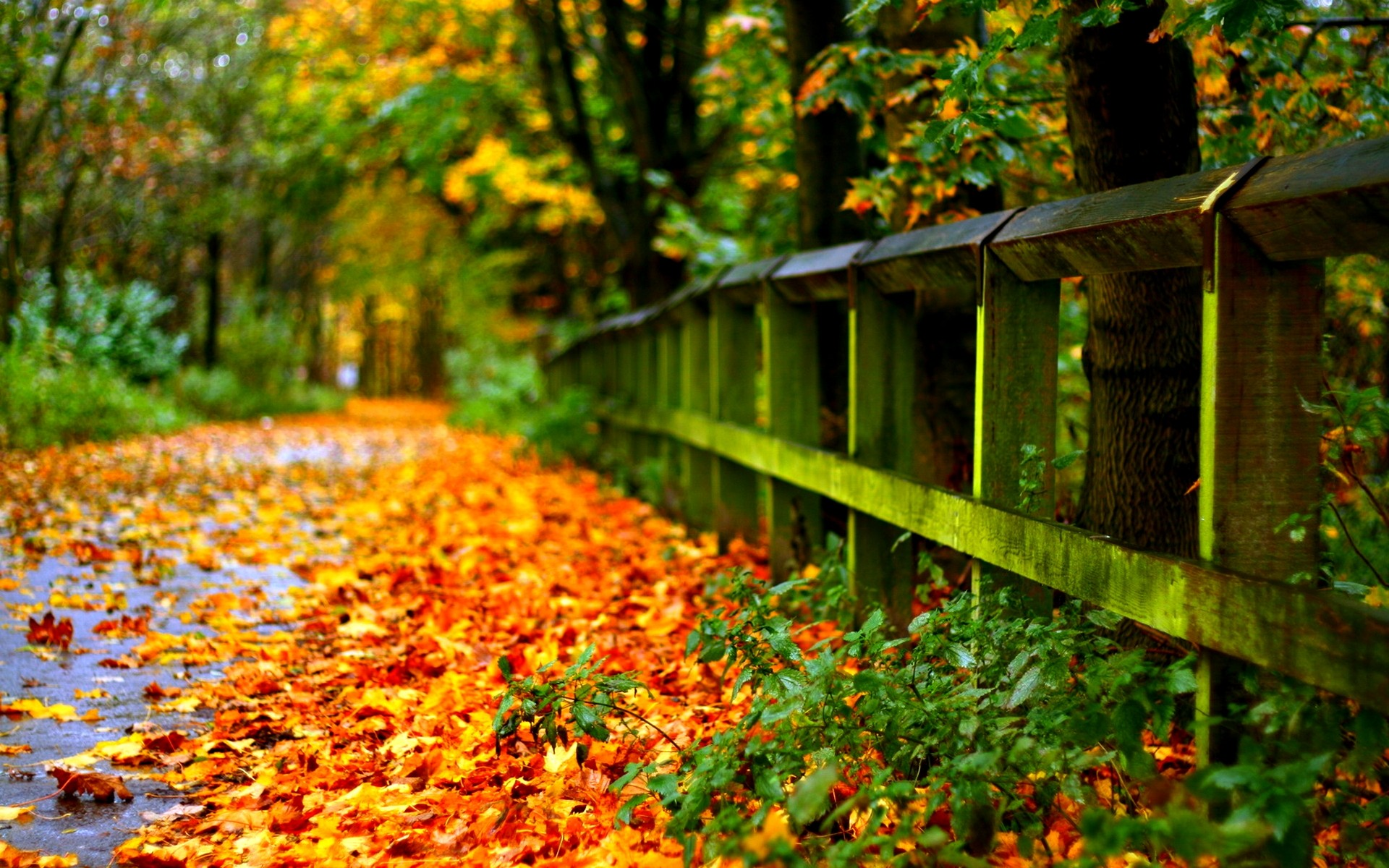 Beautiful Fall Pictures Wallpaper