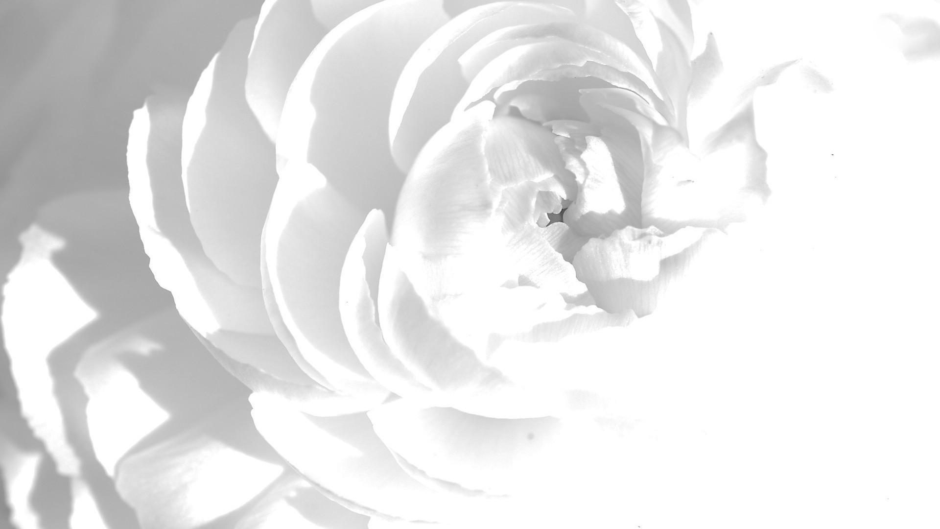 White Desktop Background ·① WallpaperTag