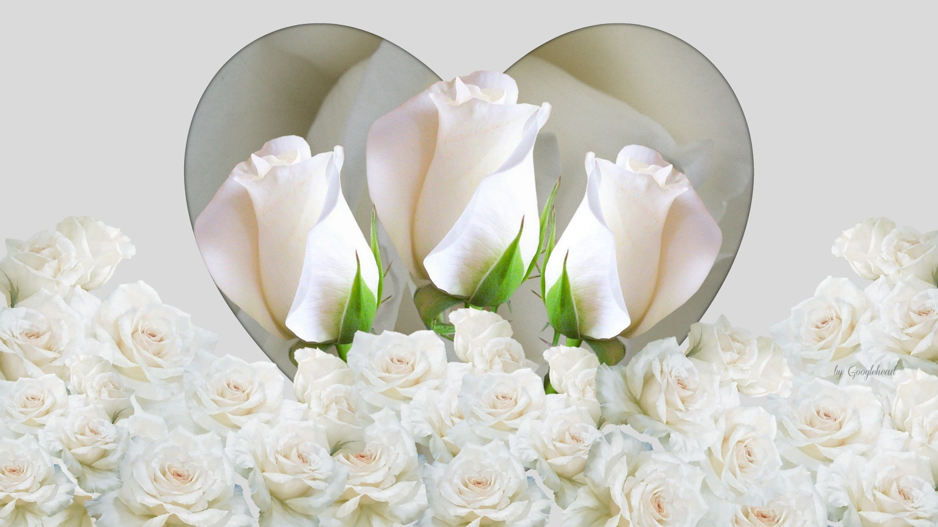 Флэш анимация белые розы
