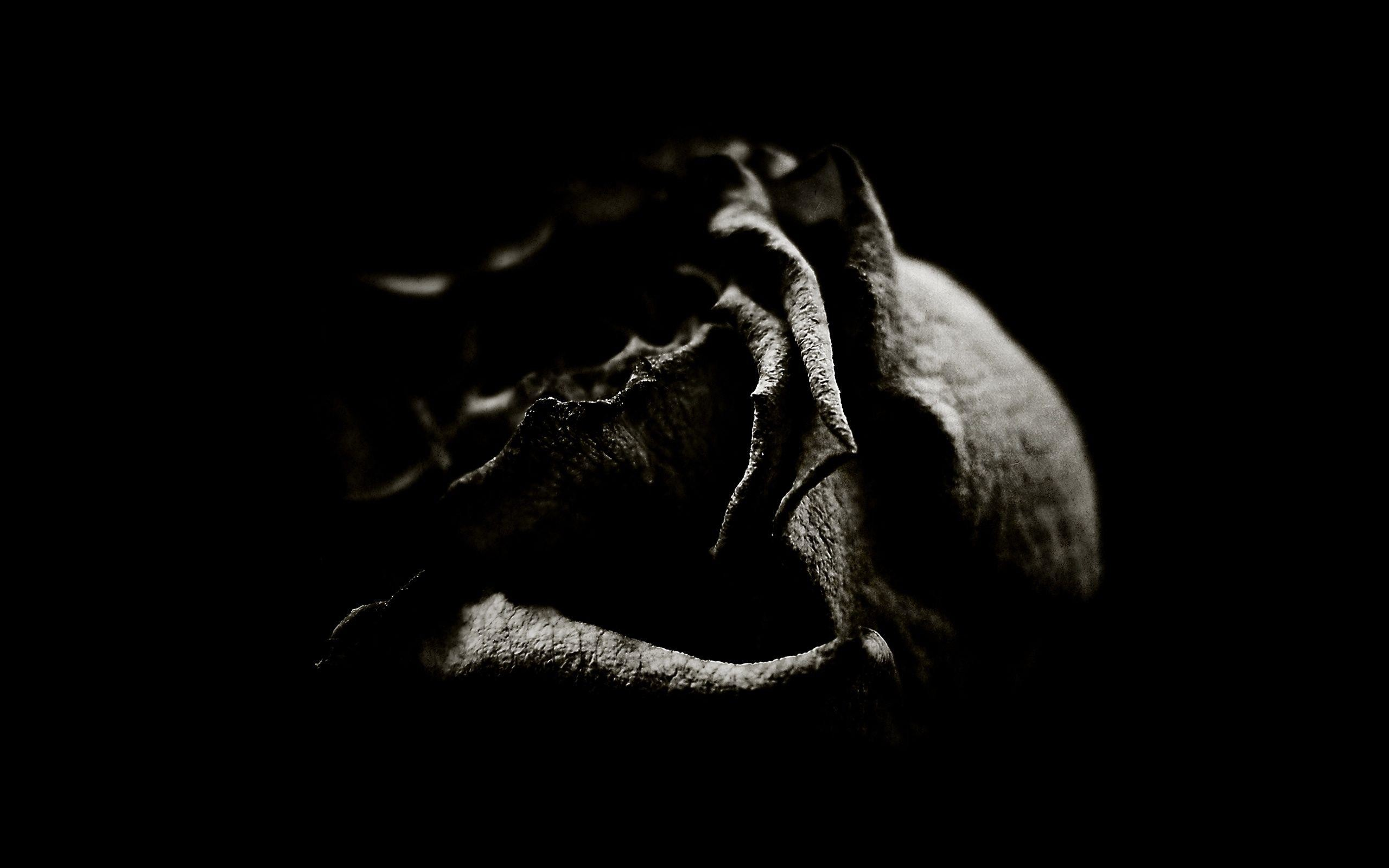 2560x1600 Wallpapers For Gothic Black Roses Wallpaper