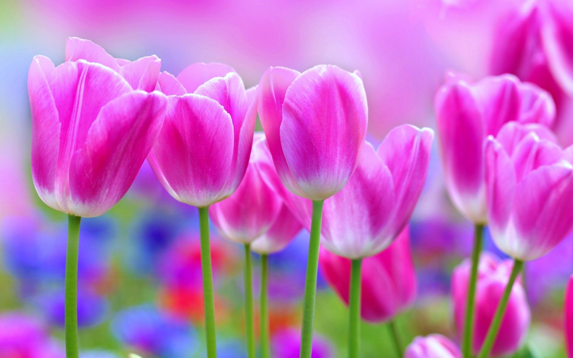 Beautiful Flowers Wallpaper ①