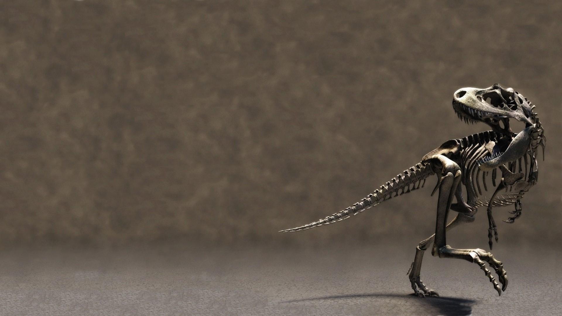 Velociraptor Wallpapers ①