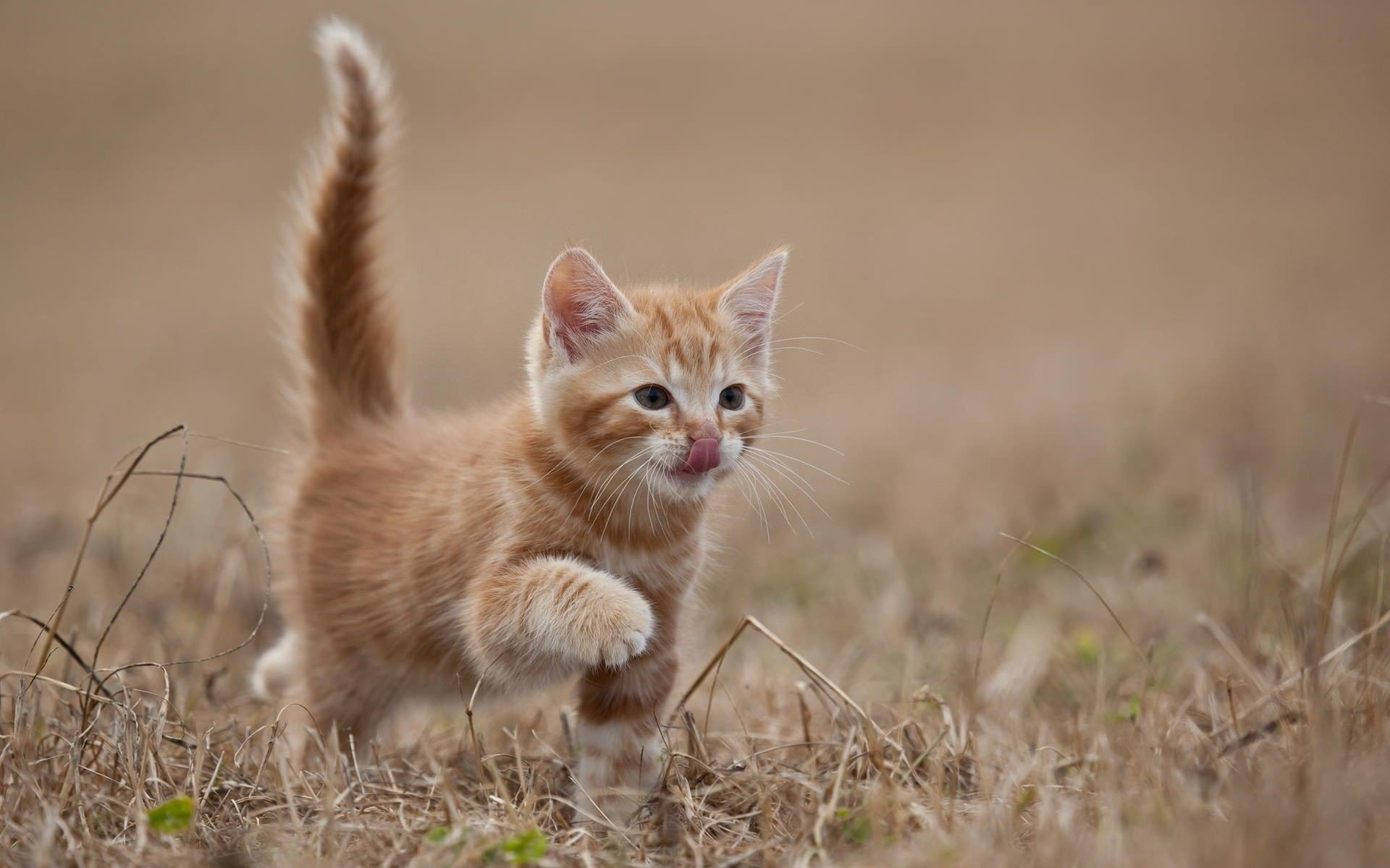 Kitten wallpaper ·① Download free cool HD backgrounds for ...