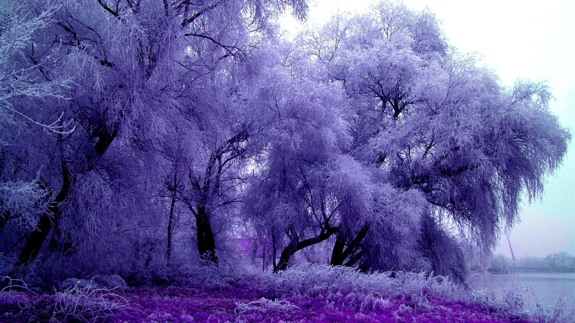 картинки фиолетовый пейзаж такой ограды имеет
