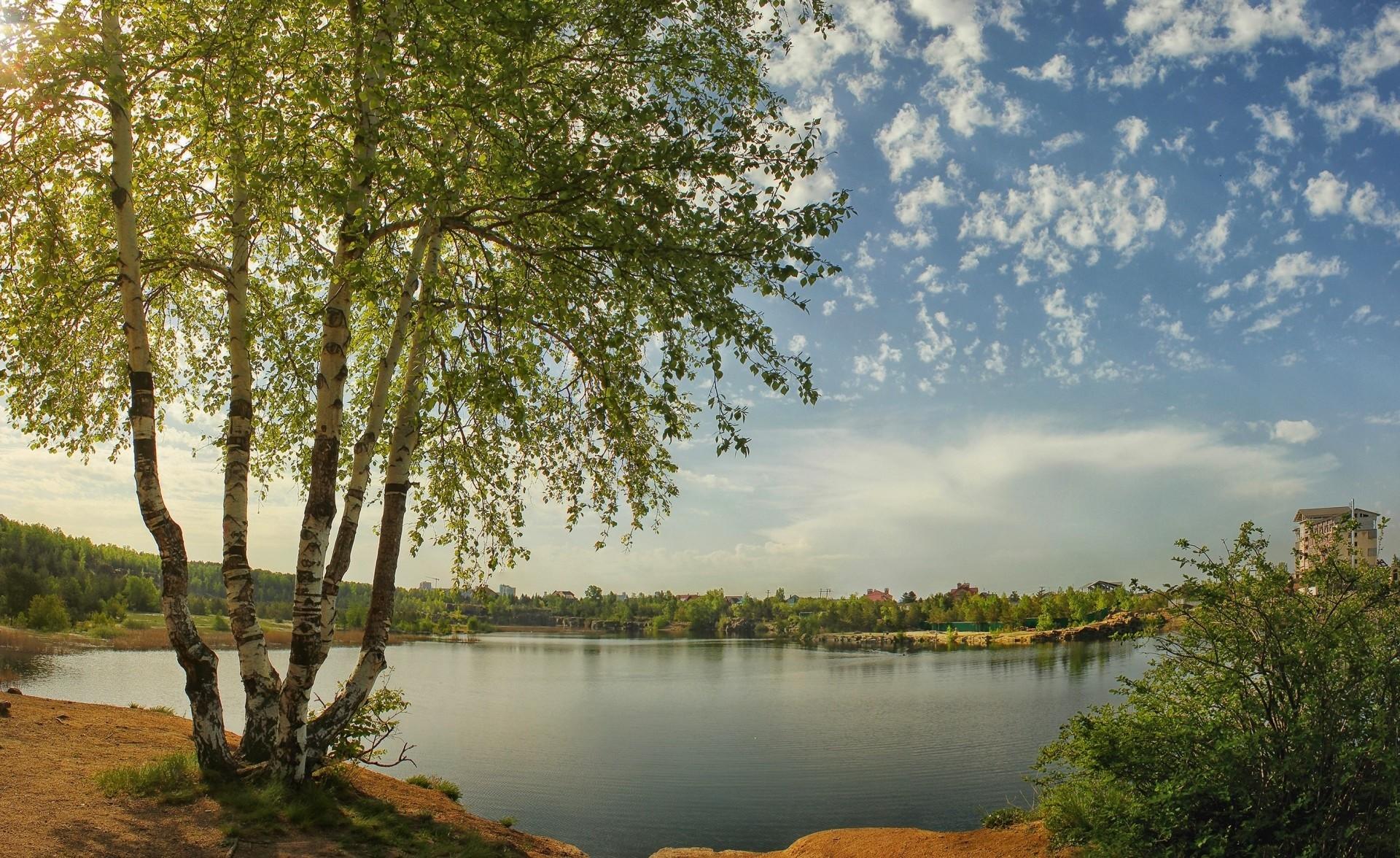 березы берег озеро  № 1195425 без смс