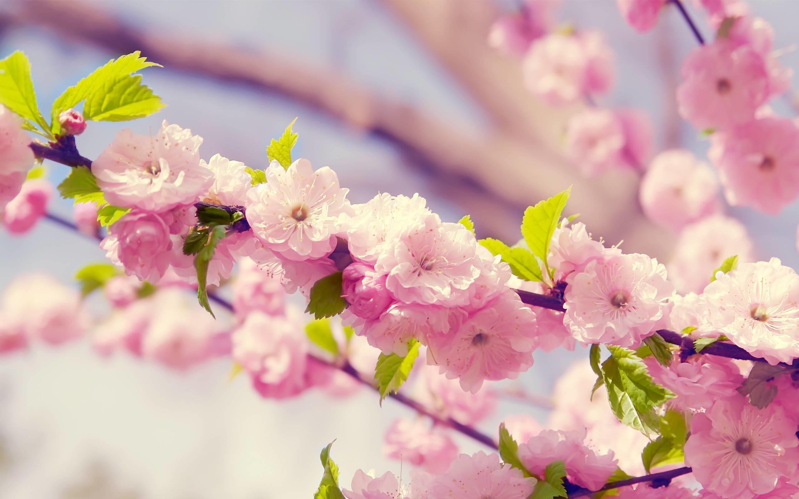 Pink Flower Desktop Wallpaper